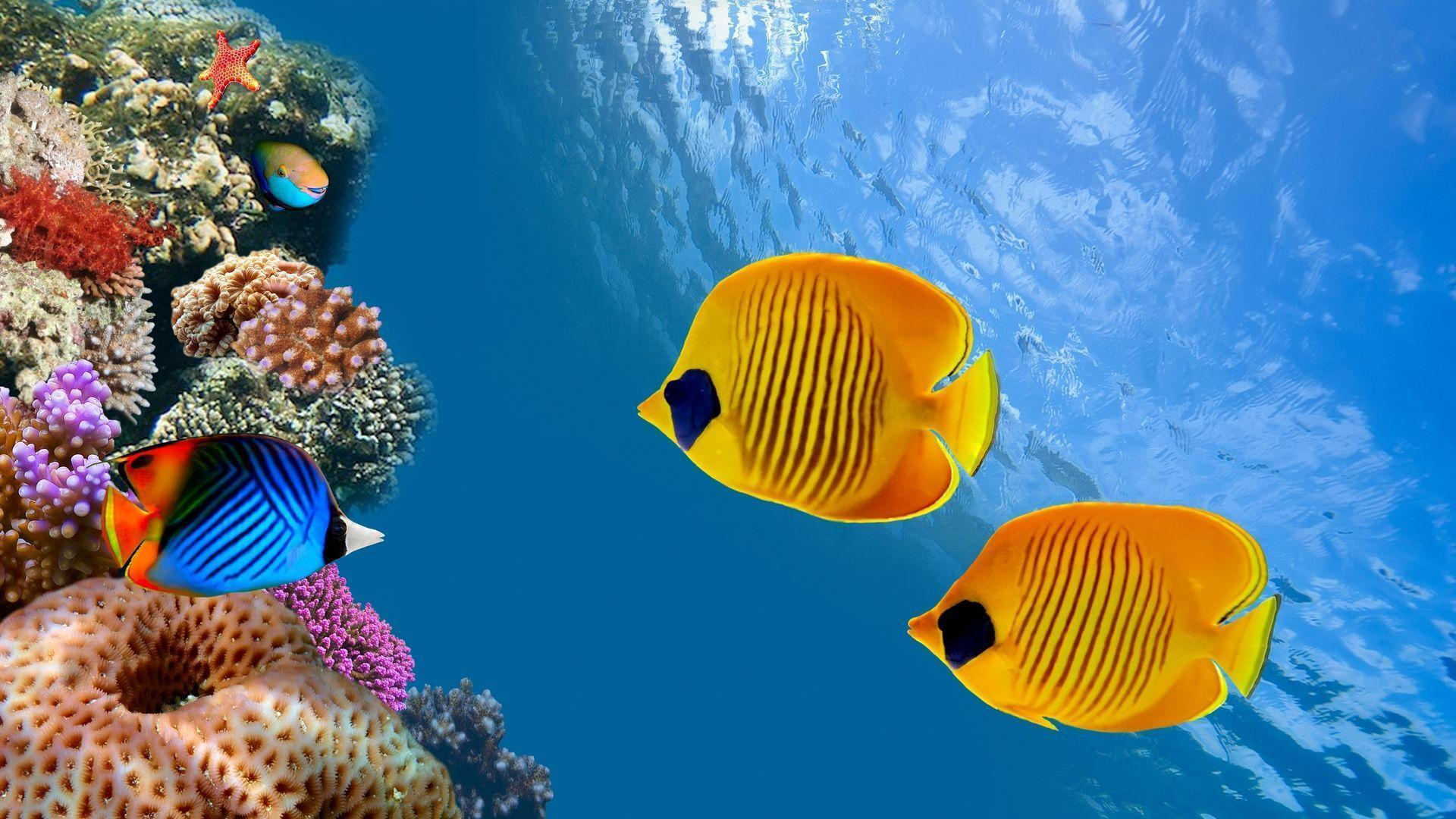 Fish Underwater Sea Image Hd Wallpapers Wallpapers Themes