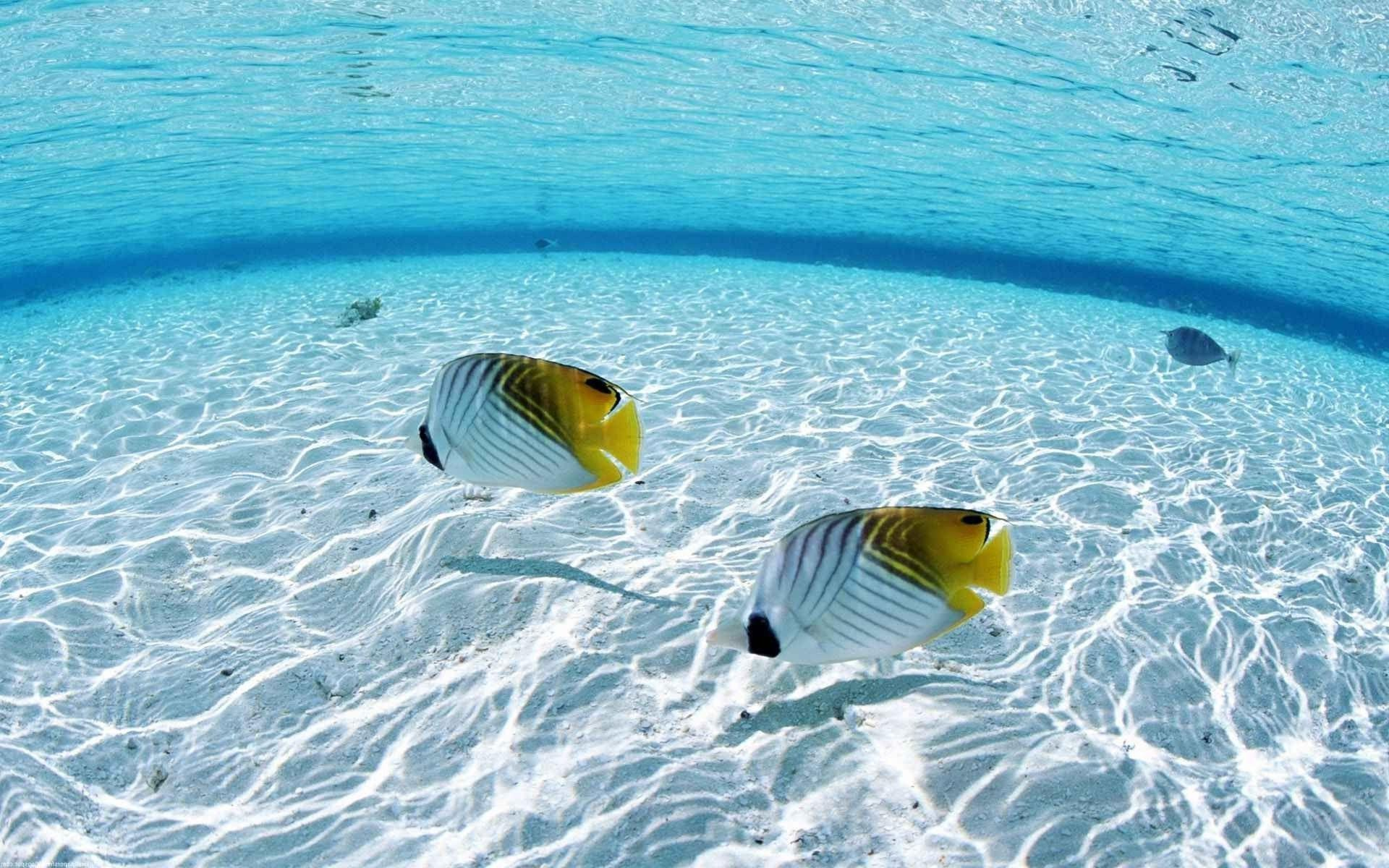 fish, Sea, Underwater Wallpapers HD / Desktop and Mobile Backgrounds