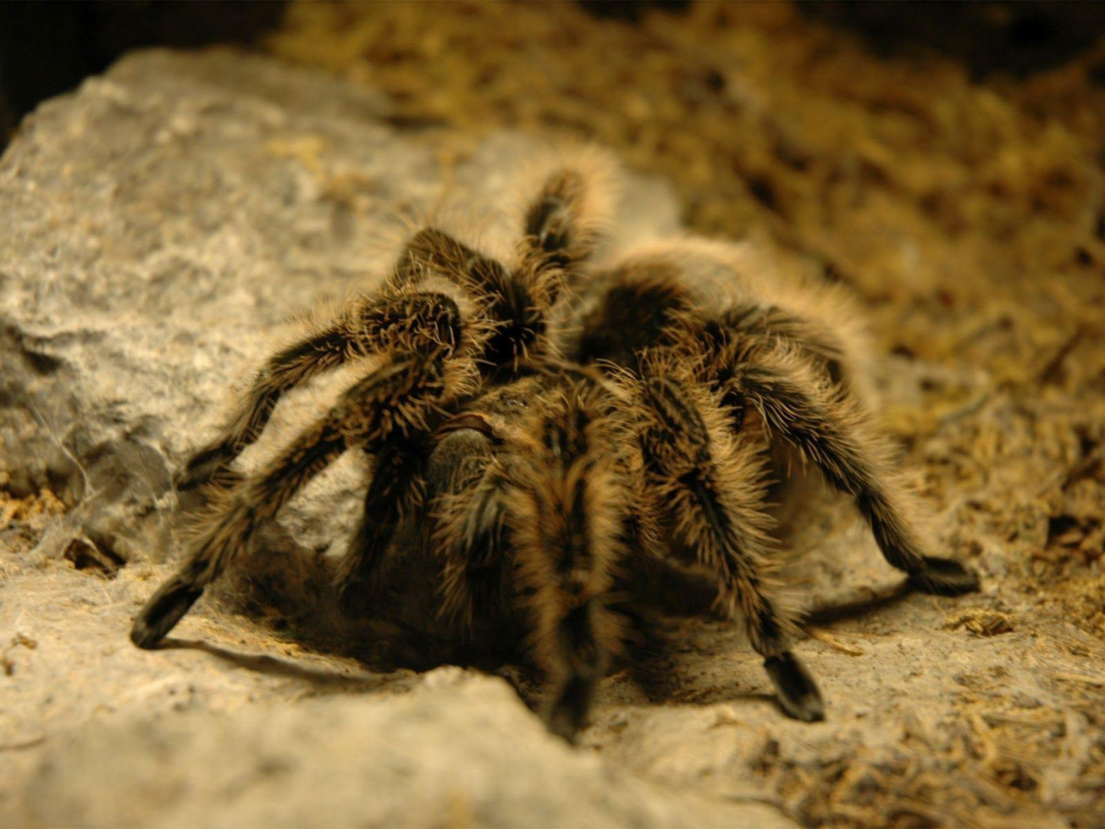говорить смотреть фото тарантула распространению инфекции неадекватное