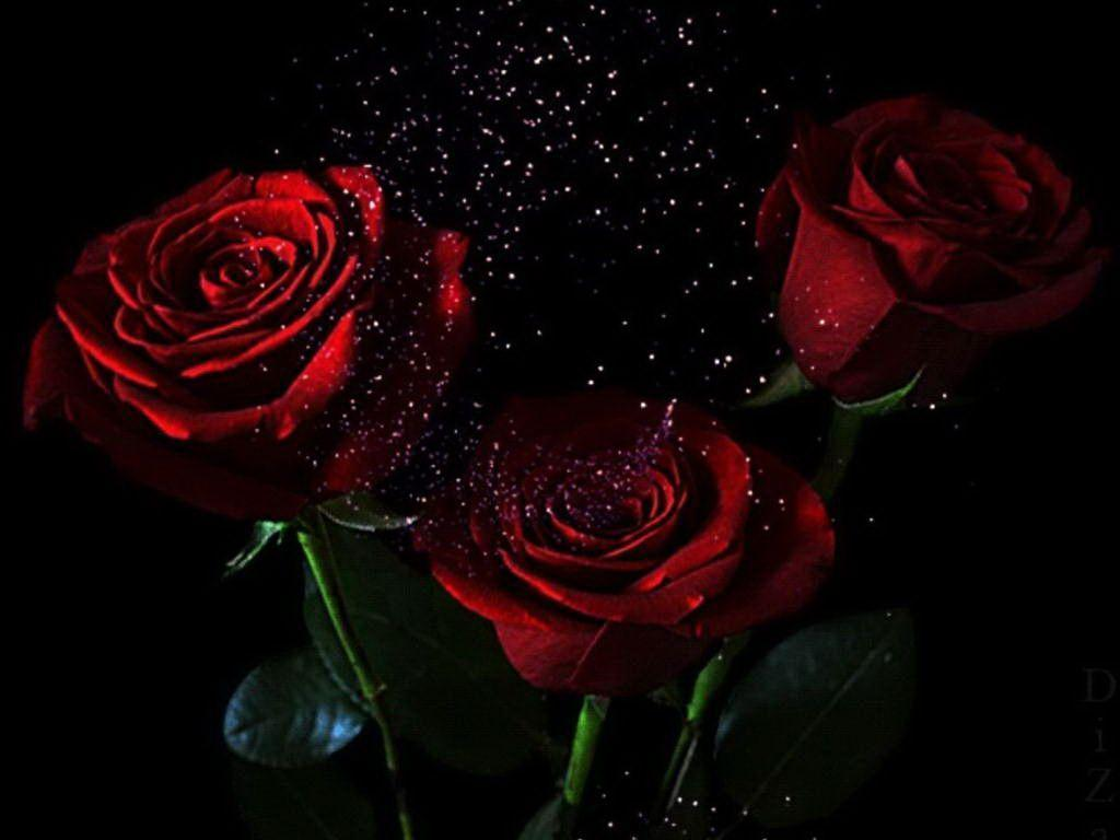 Dark Roses Hd Wallpapers: Black And Red Roses Wallpapers