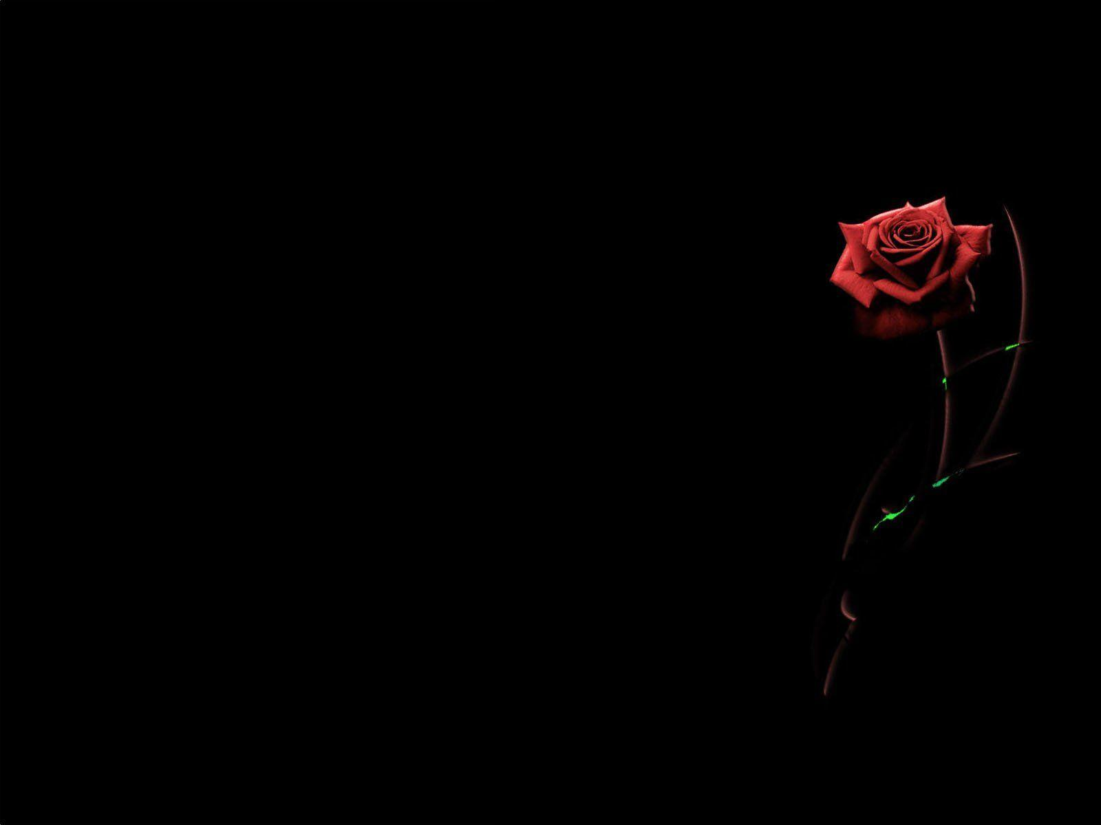 Black And Red Roses Wallpapers Wallpaper Cave