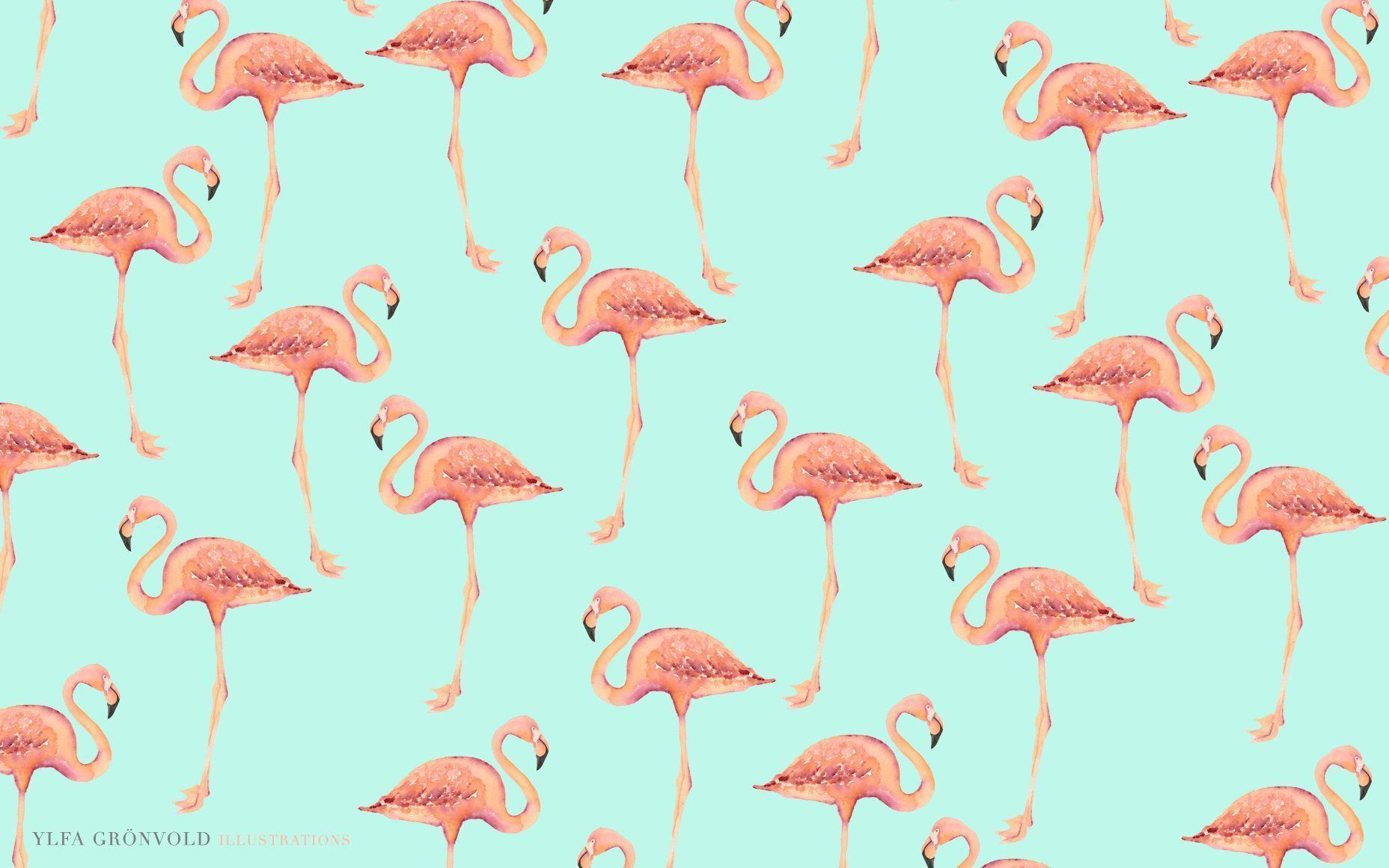 Flamingos Wallpapers Wallpaper