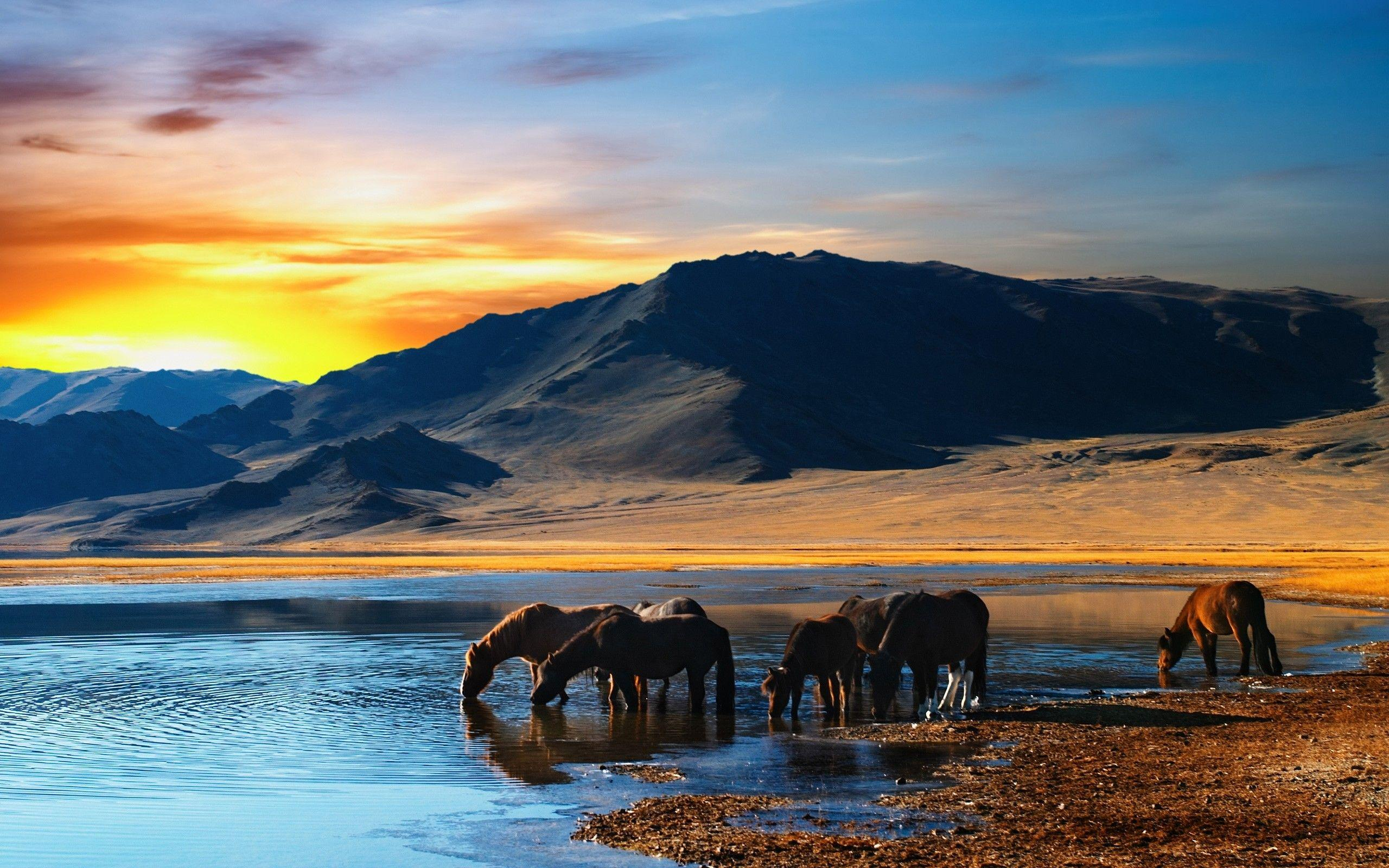 Herd of horses in mongolian wilderness wallpaper | 2560x1600 ...