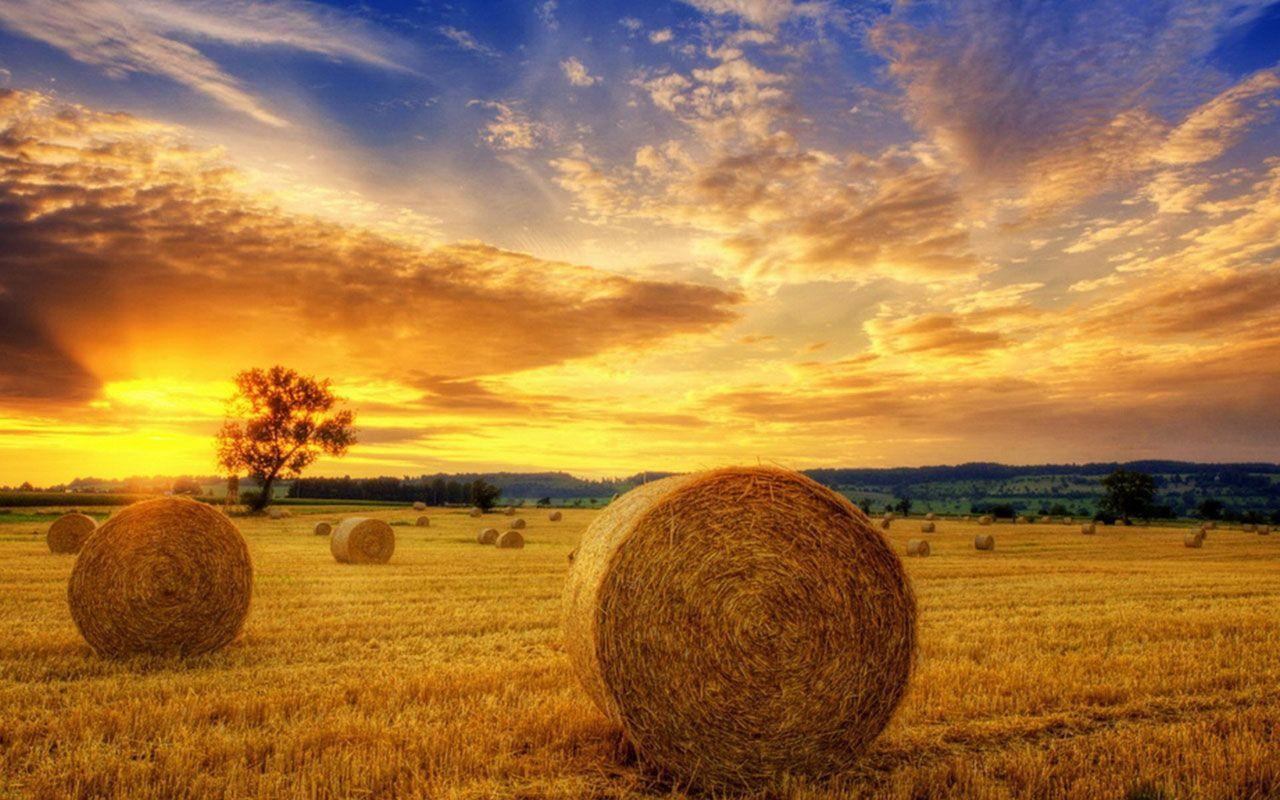 YI:542 - Harvest Wallpapers, Harvest HD Pictures - 38 Free Large ...