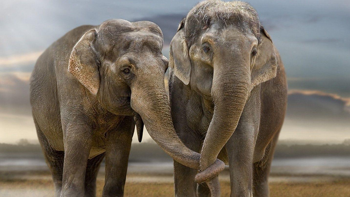 It's World Elephant Day!   AntiquityNOW
