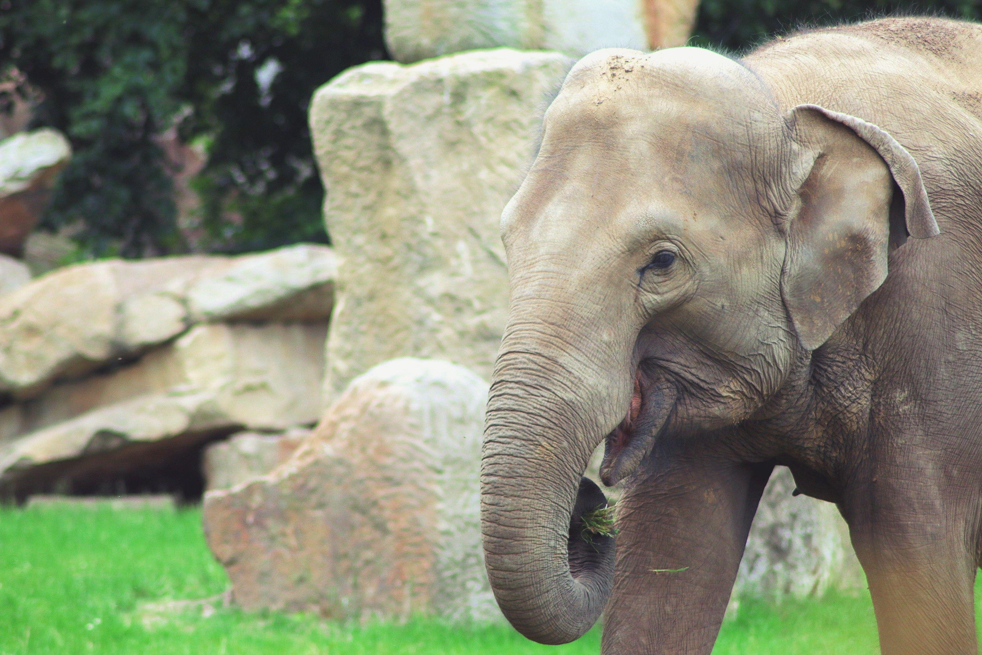 south africa elephant free download hd wallpapers   HD Wallpapers ...