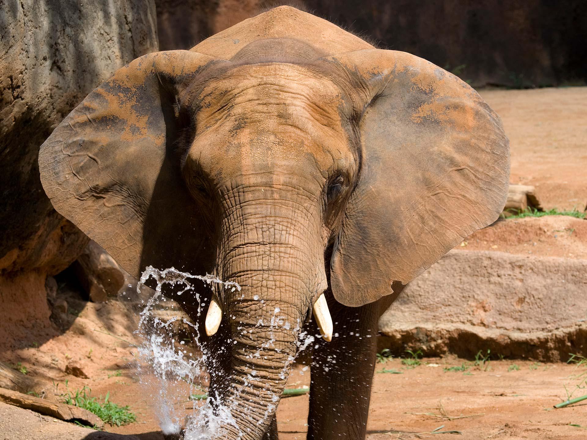 World Elephant Day - Zoo Atlanta