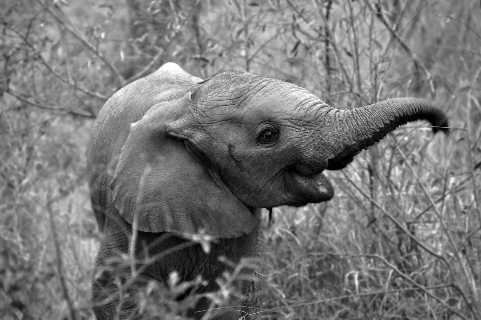 baby-elephant.jpg (1921×1280)   Photography - Elephants ...