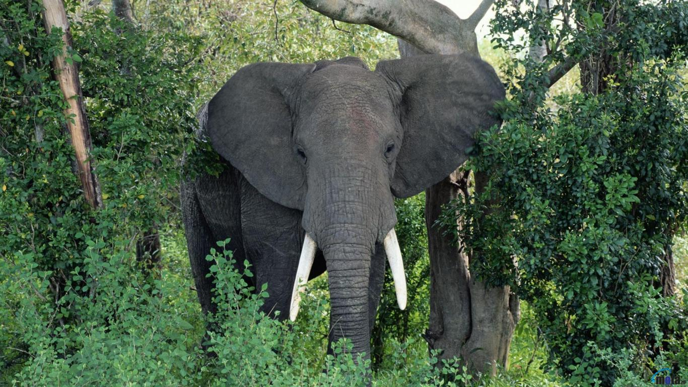 Guardians of ga'hoole, Rainforests and World elephant day on Pinterest