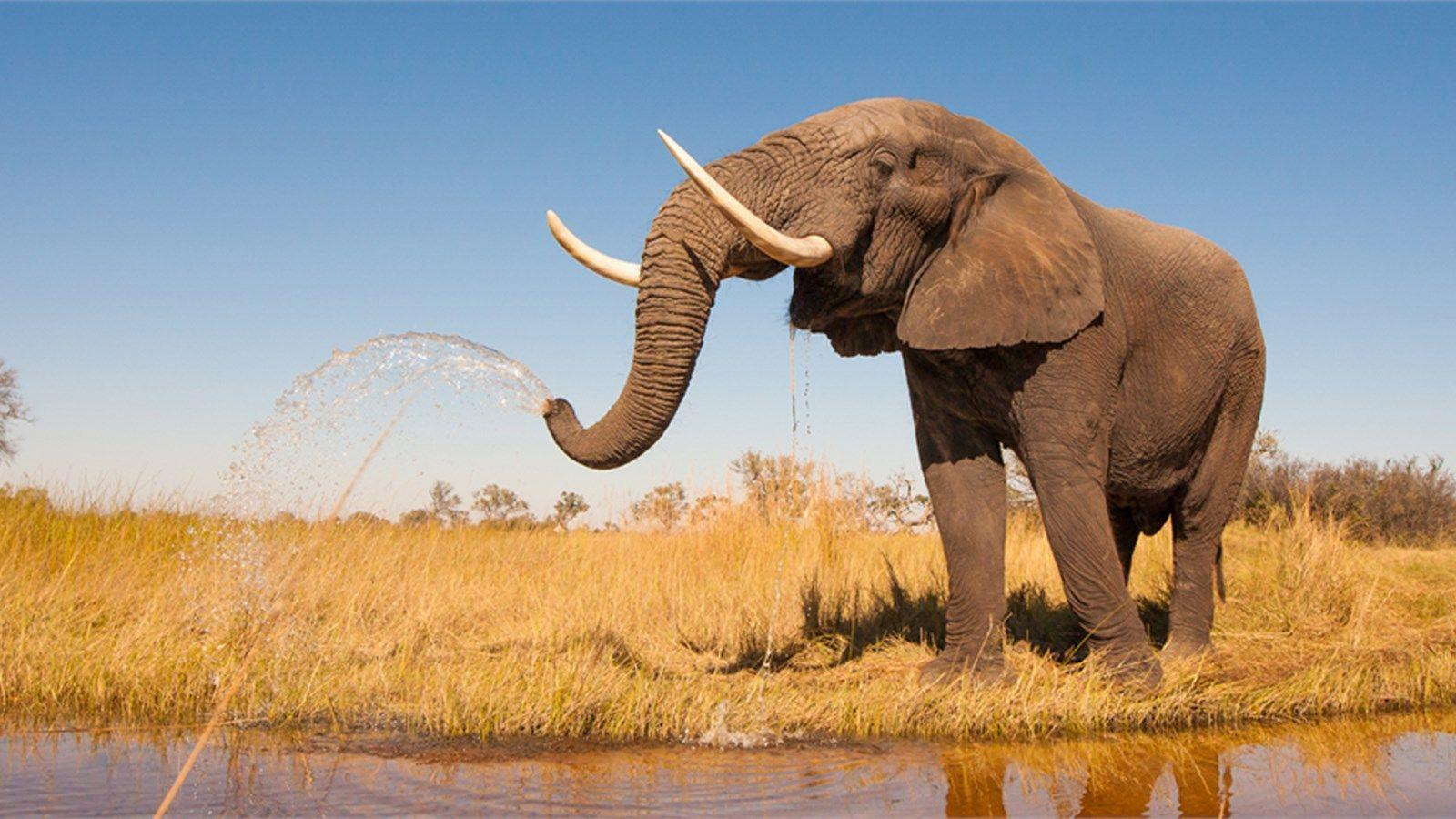 It's World Elephant Day! - National Geographic