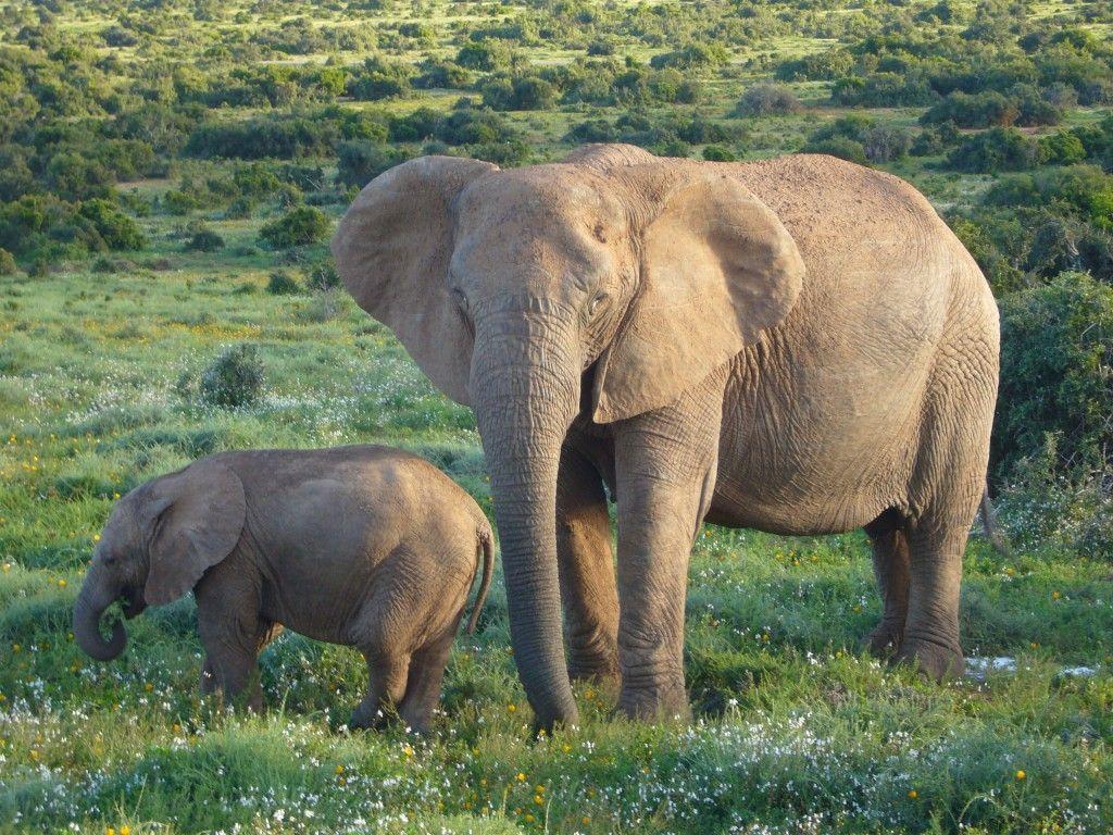 EMA   World Elephant Day 2015