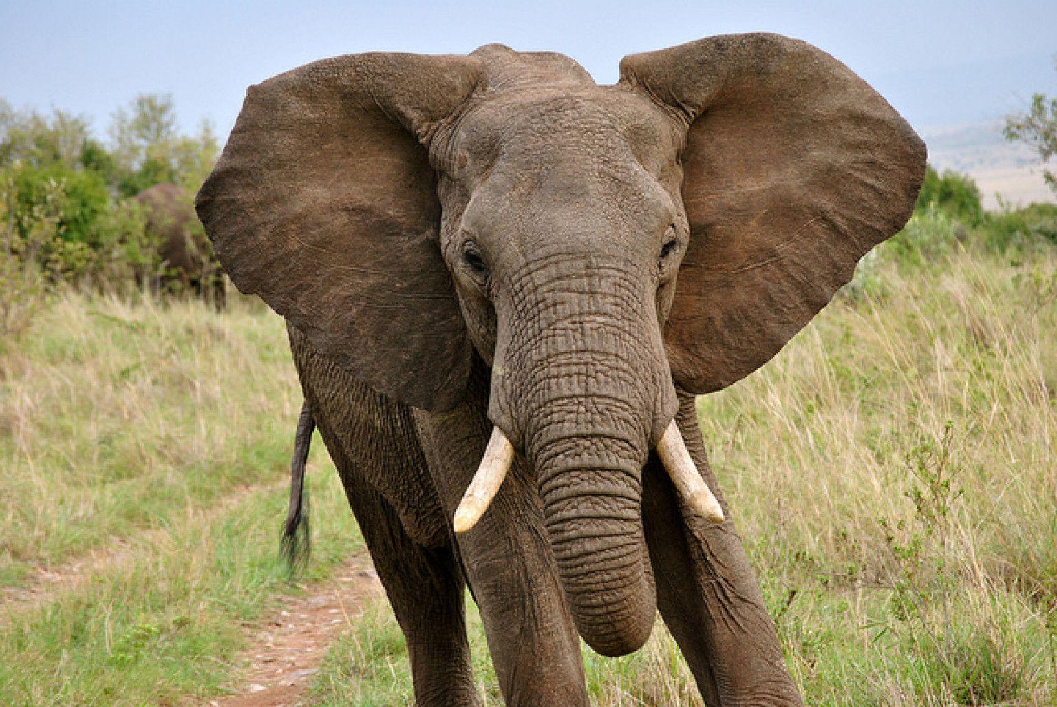 Mort d'un coup de trompe d'éléphant en Seine-et-Marne   Animaux ...