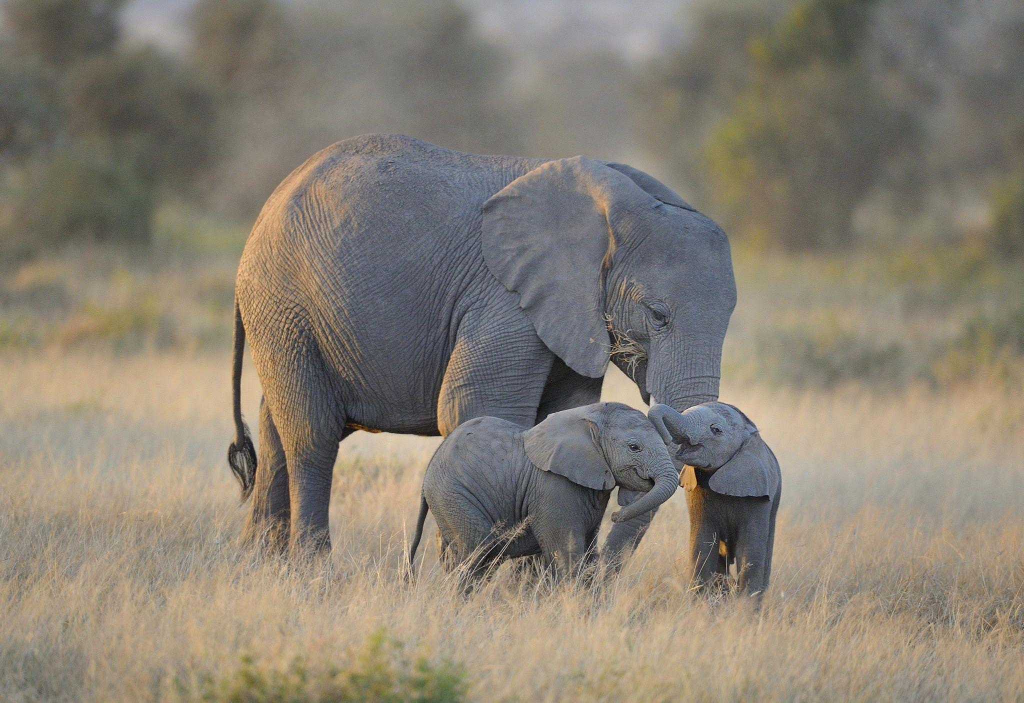 Stunning Elephant Wallpapers, Magnificent HDQ Live Stunning ...