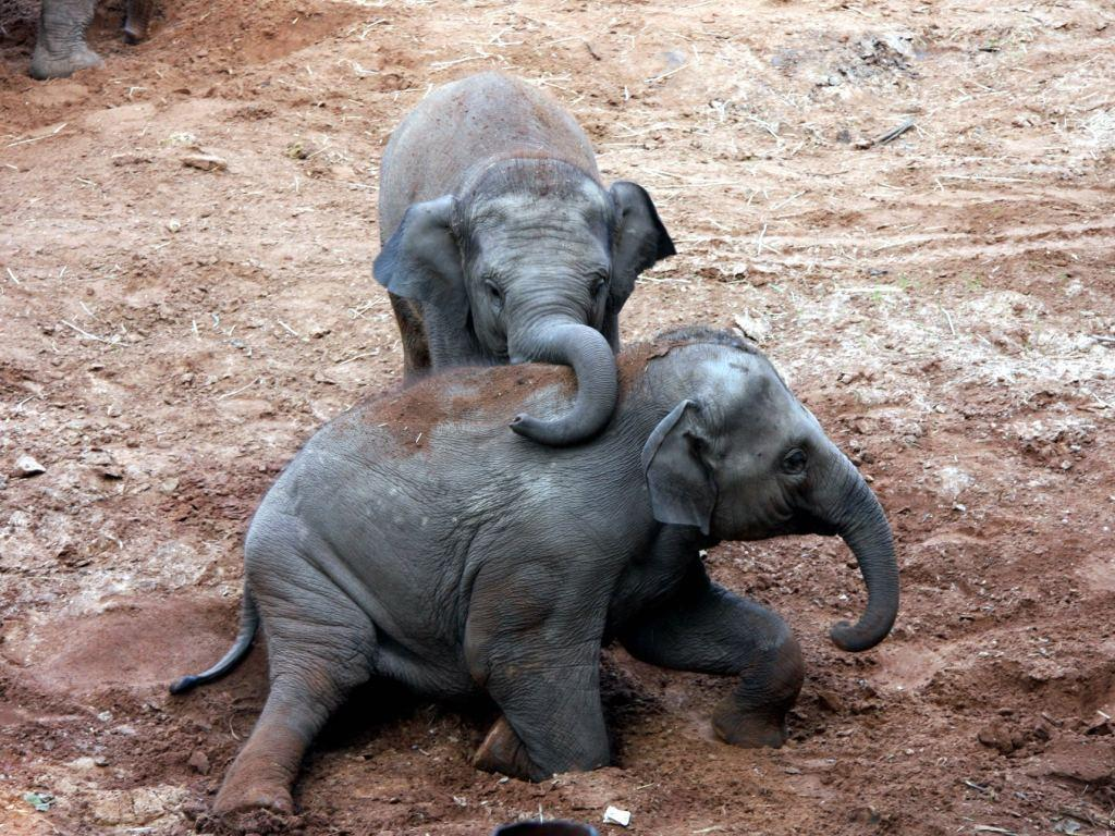 Wonderful Collection: Free Baby Elephant Wallpaper, HQ Definition ...