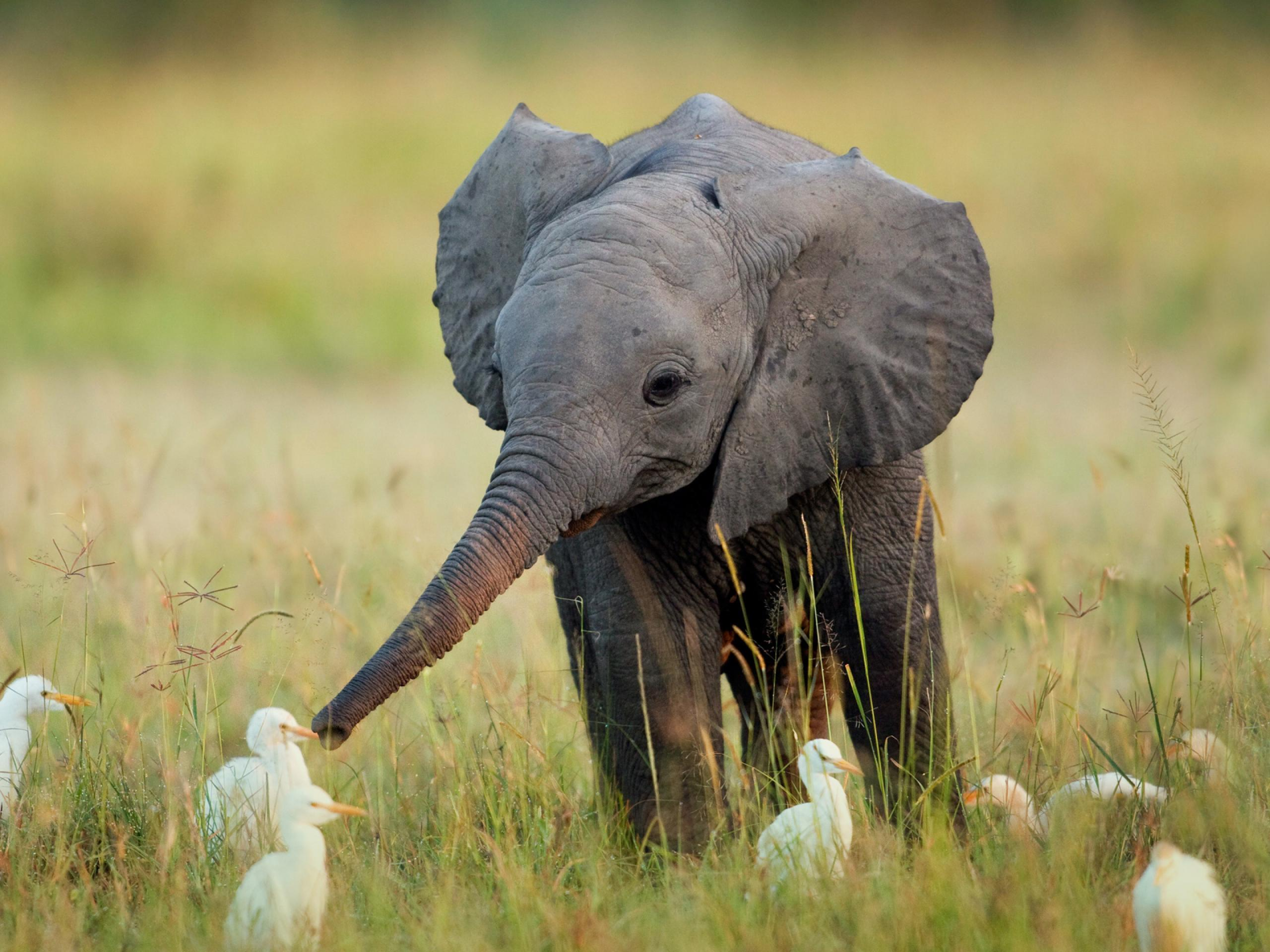 Best 25+ Images of elephant ideas on Pinterest