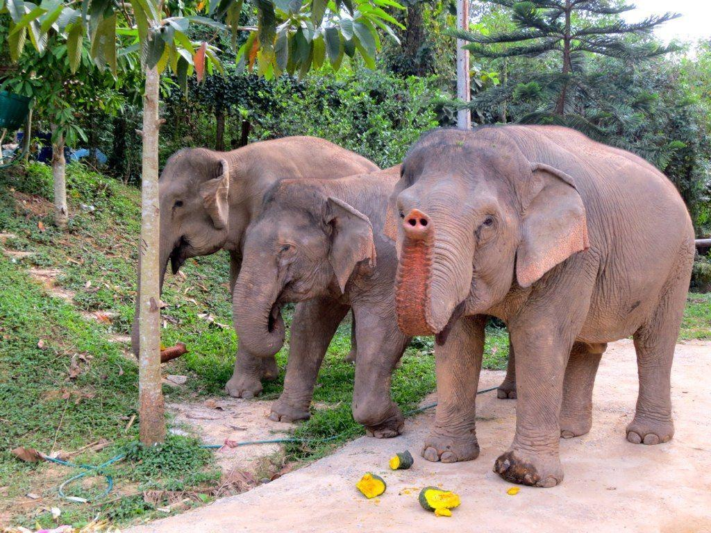 Happy World Elephant Day ! This is the marvelous Wassana at Boon ...