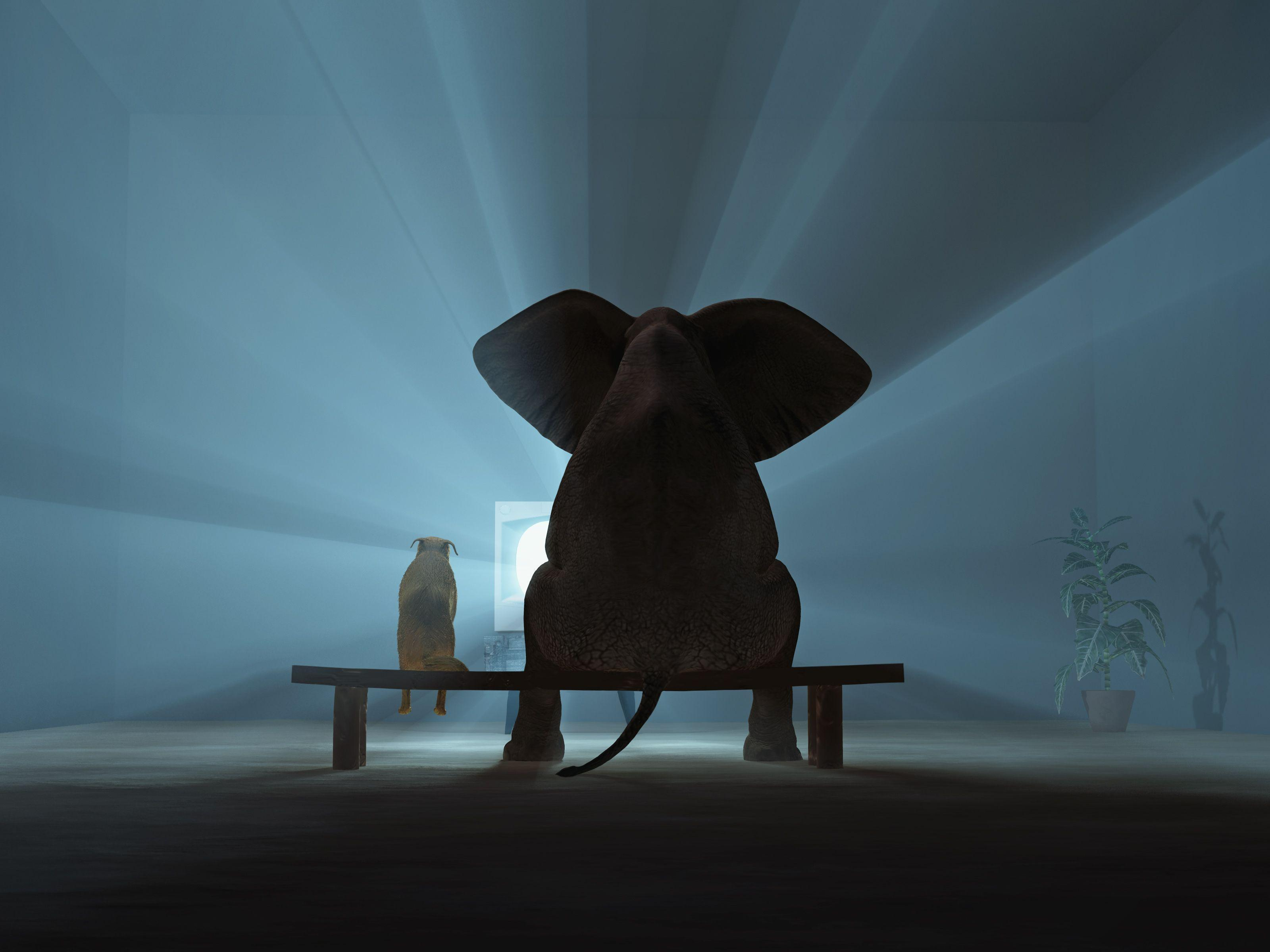 World Elephant Day …. August 12, 2014!!   It Is What It Is