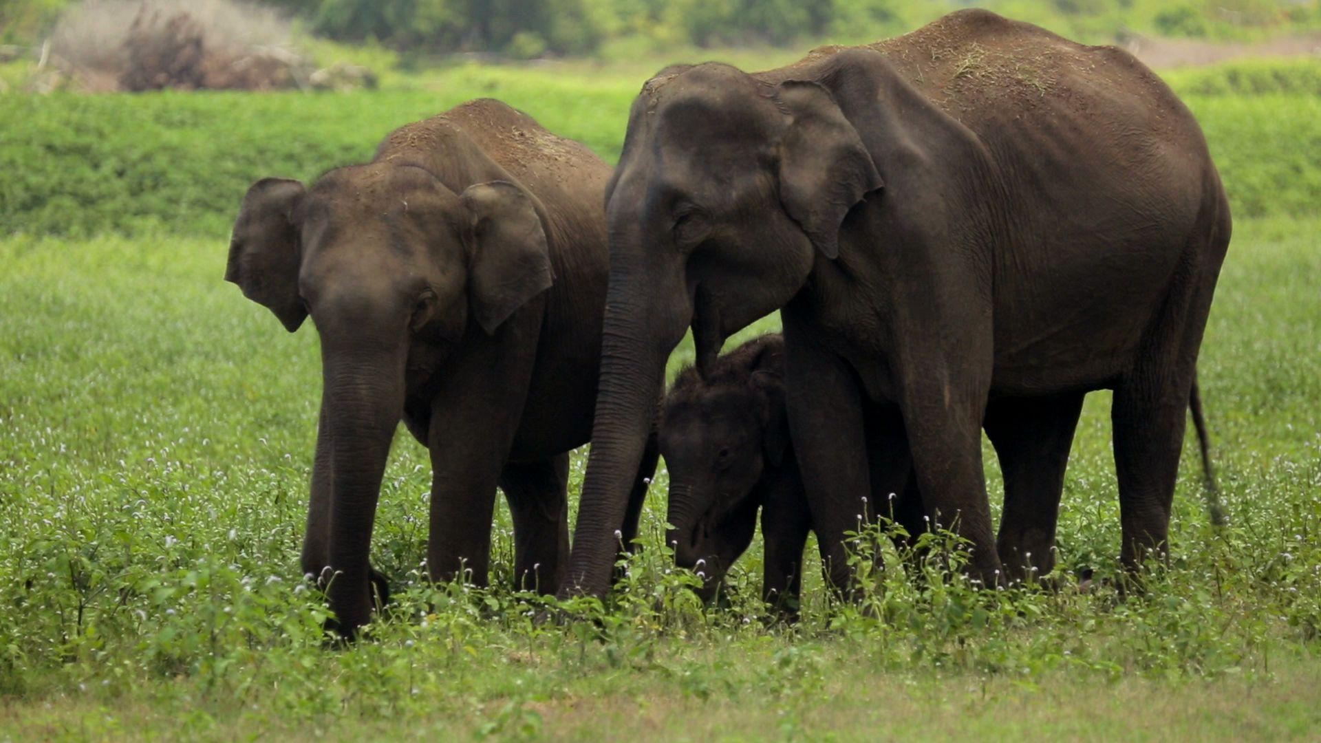 Examining Core Values on World Elephant Day