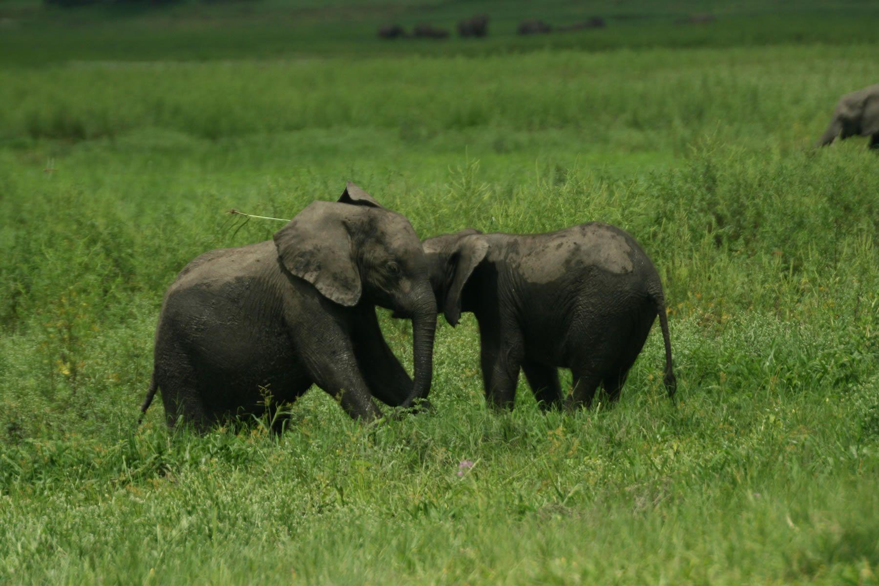 Baby Elephant Wallpapers – Cool Digital Photography