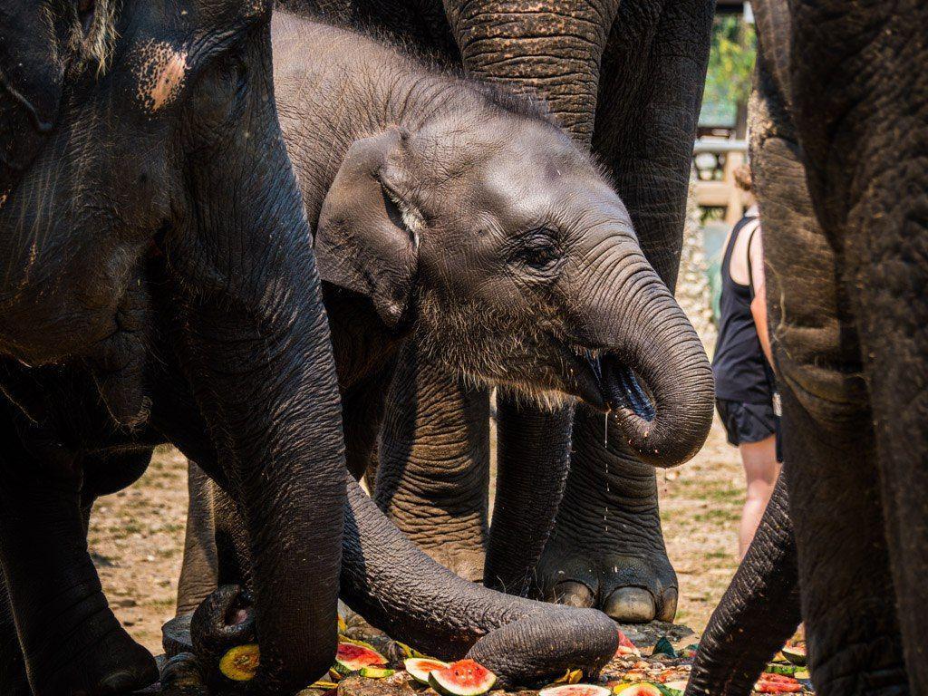 World Elephant Day: 7 Ways to Help Elephants When You Travel   My ...