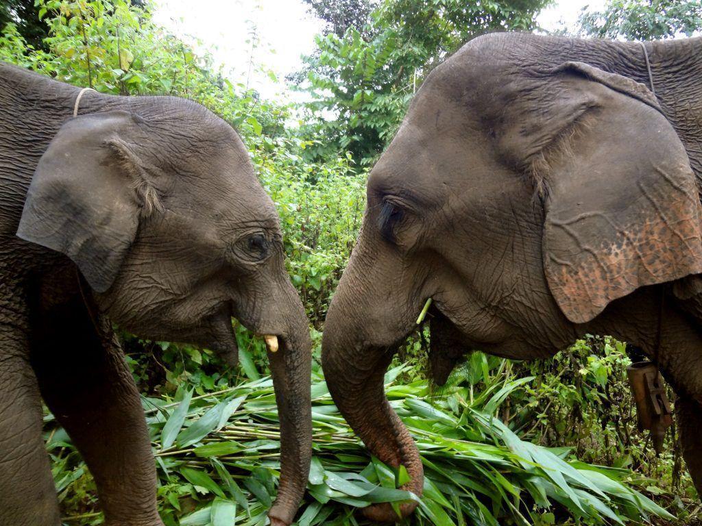 Come Together To Help Elephants On World Elephant Day - SEEtheWILD ...