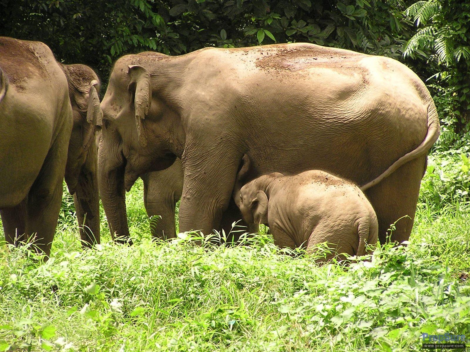 World Elephant Day, August 12 - Google+