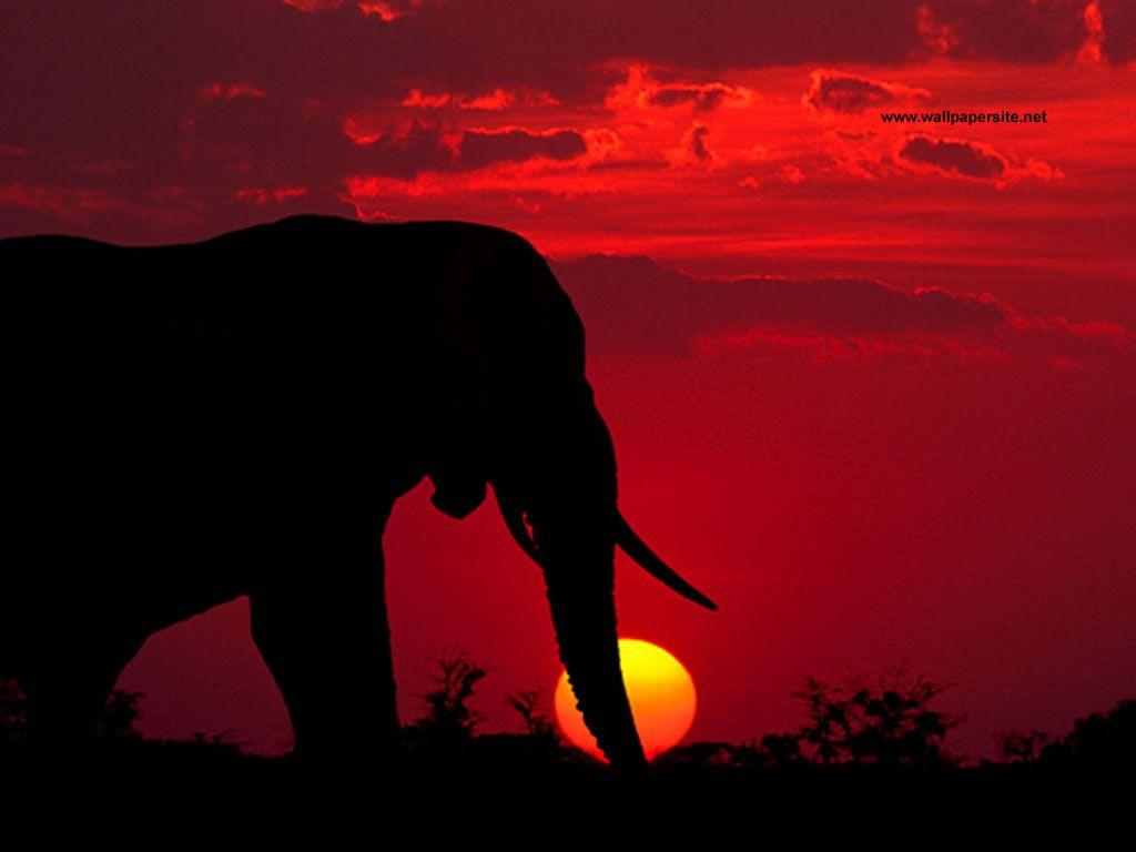 African Elephant Sunset   TO GET THE DESKTOP WALLPAPER : Click on ...