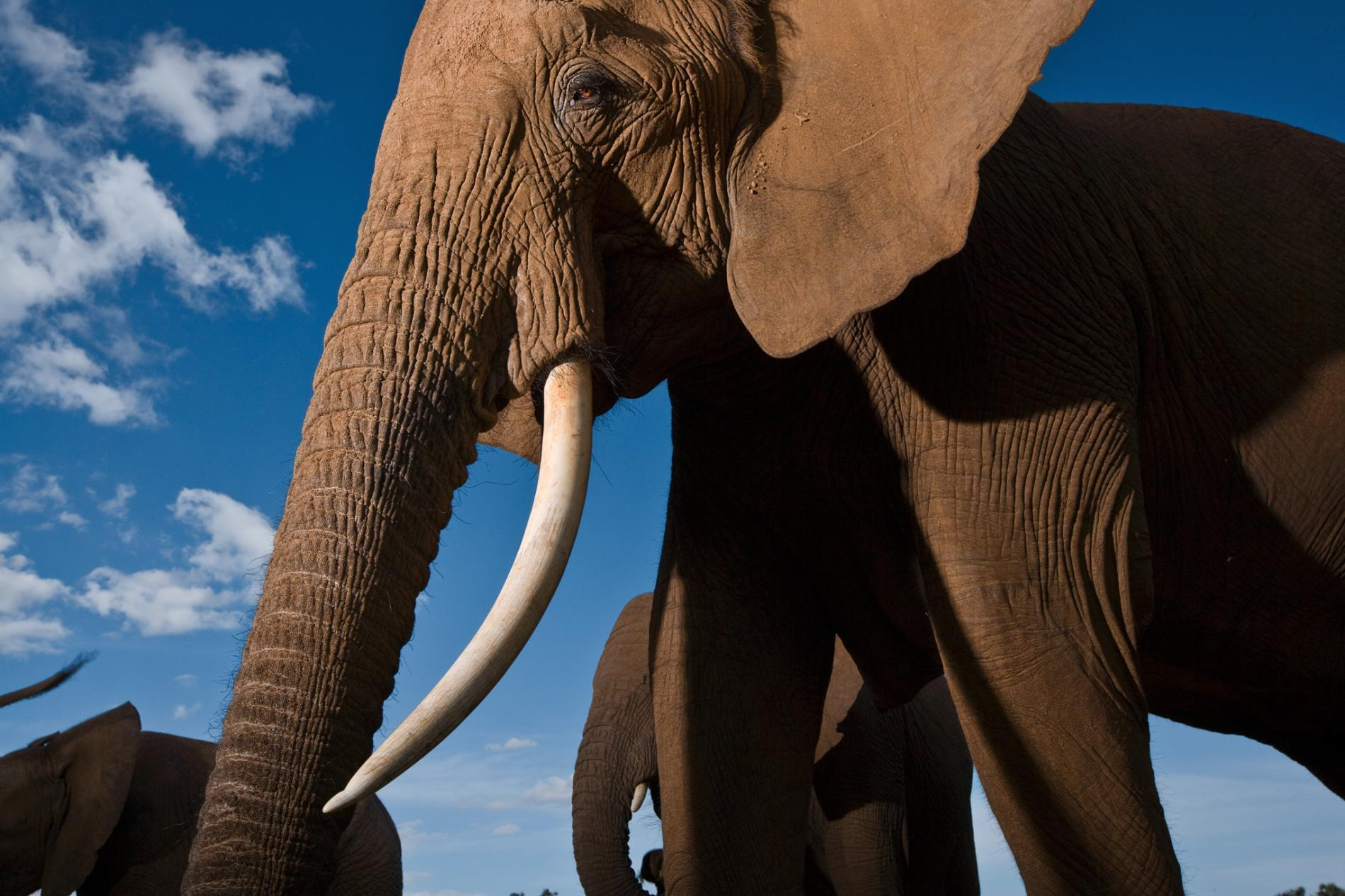 Pictures: World Elephant Day