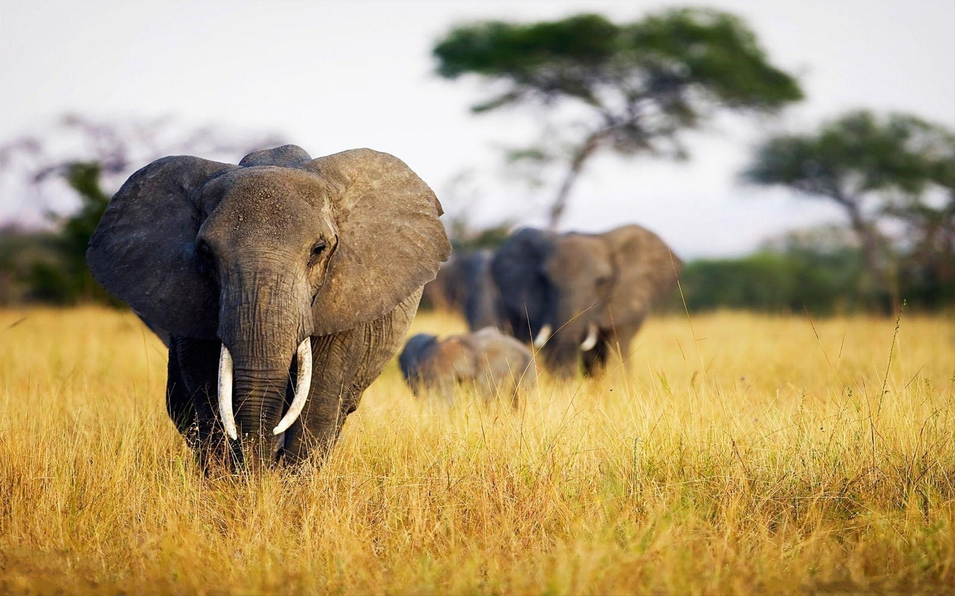 The Elephant Genes – The Fight Against Cancer   A Changing Wild World