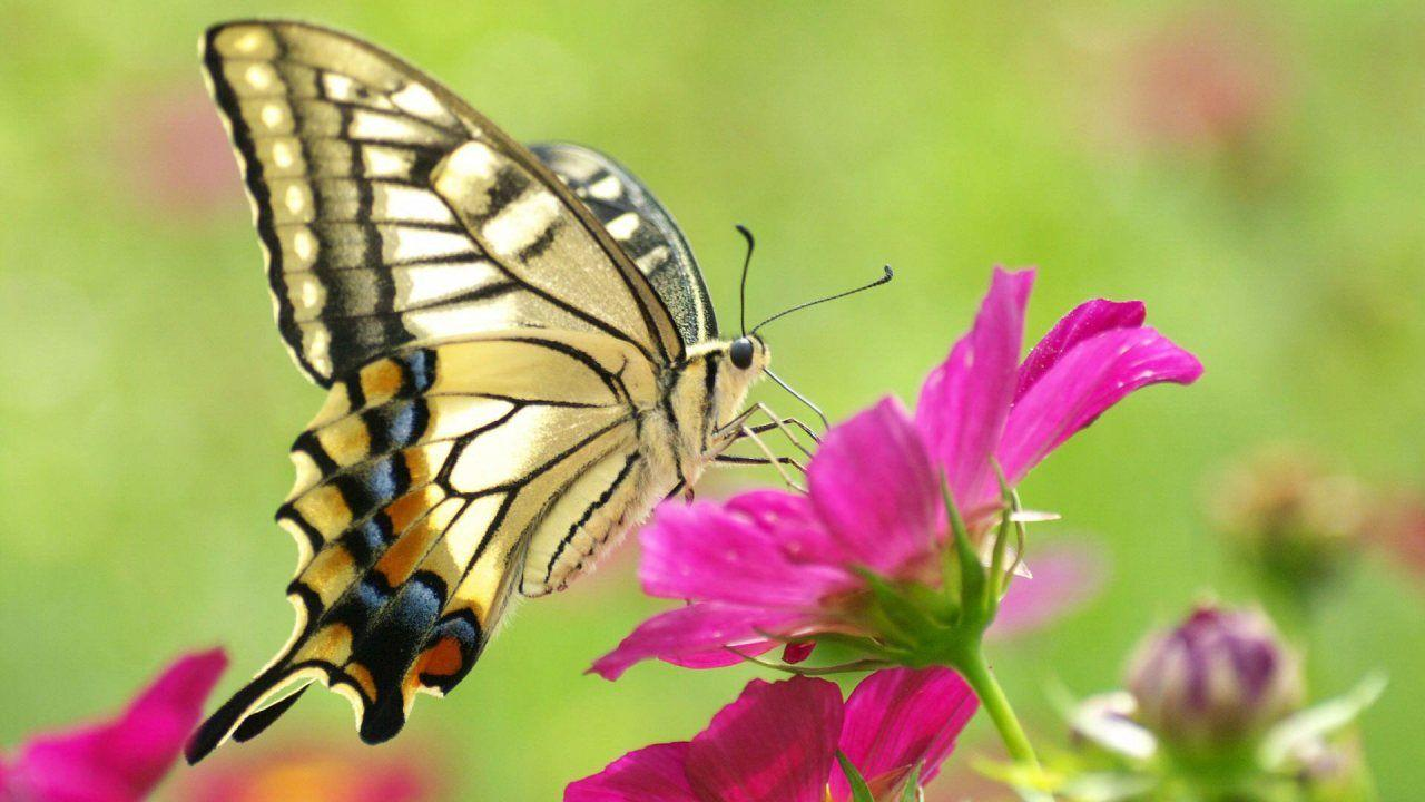 Lovely & Beautiful Birds Butterfly HD Wallpapers Photos And Images ...