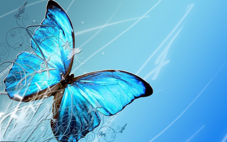Butterfly Hd Wallpaper - WallpaperSafari