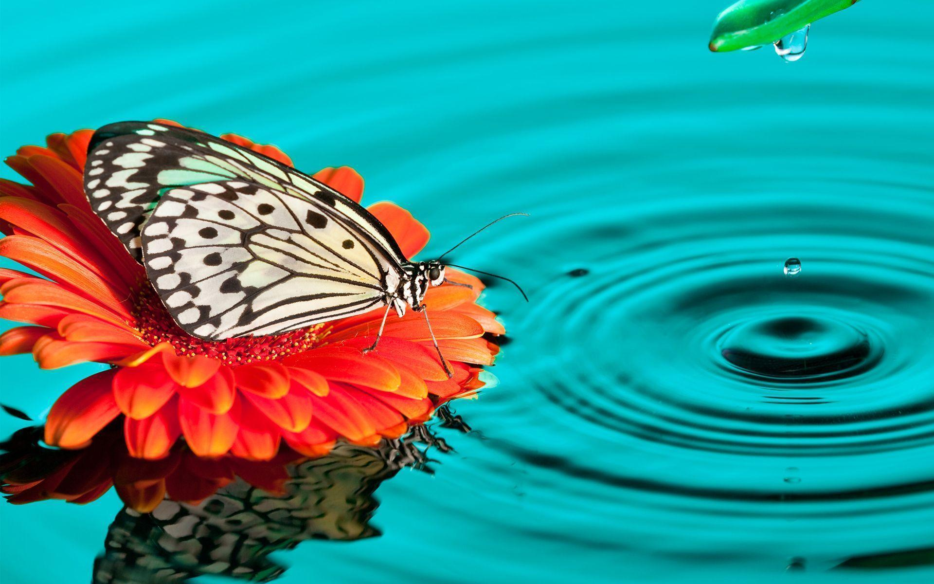 Wallpapers Tagged With BUTTERFLY | BUTTERFLY HD Wallpapers | Page 1