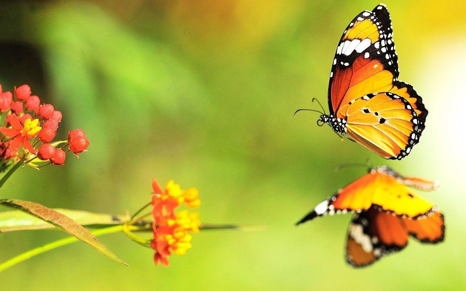 Butterflies Amazing Full Screen HD Wallpapers | HD Wallapers for Free