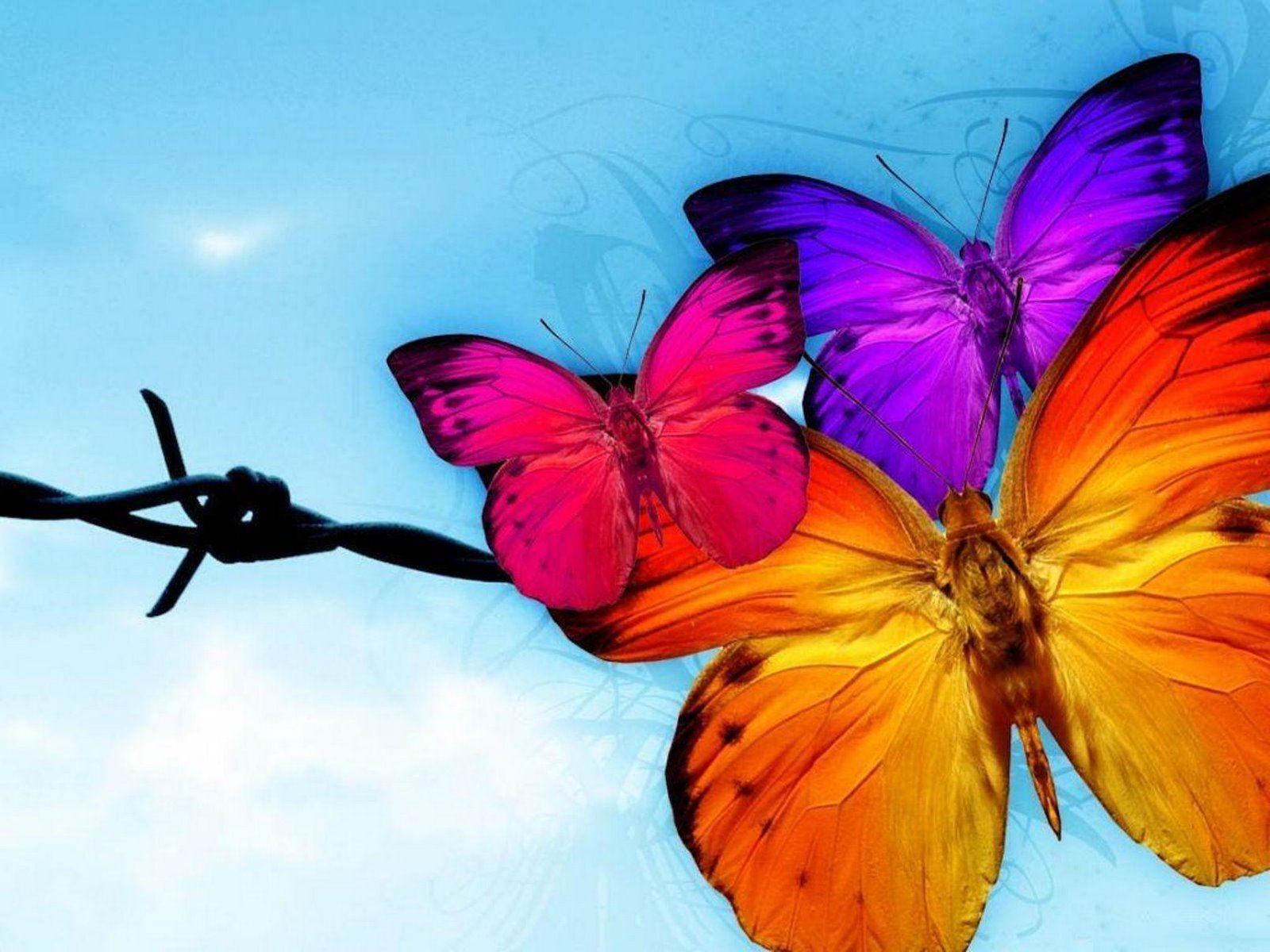 52 best butterflies images on Pinterest