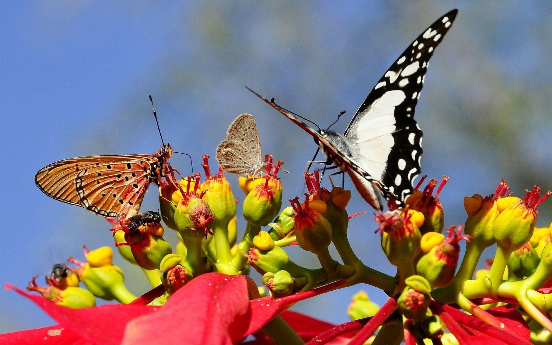 Butterflies hd Wallpapers | Pictures