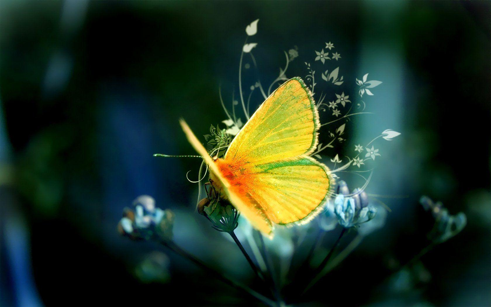 1194 Butterfly HD Wallpapers | Backgrounds - Wallpaper Abyss ...
