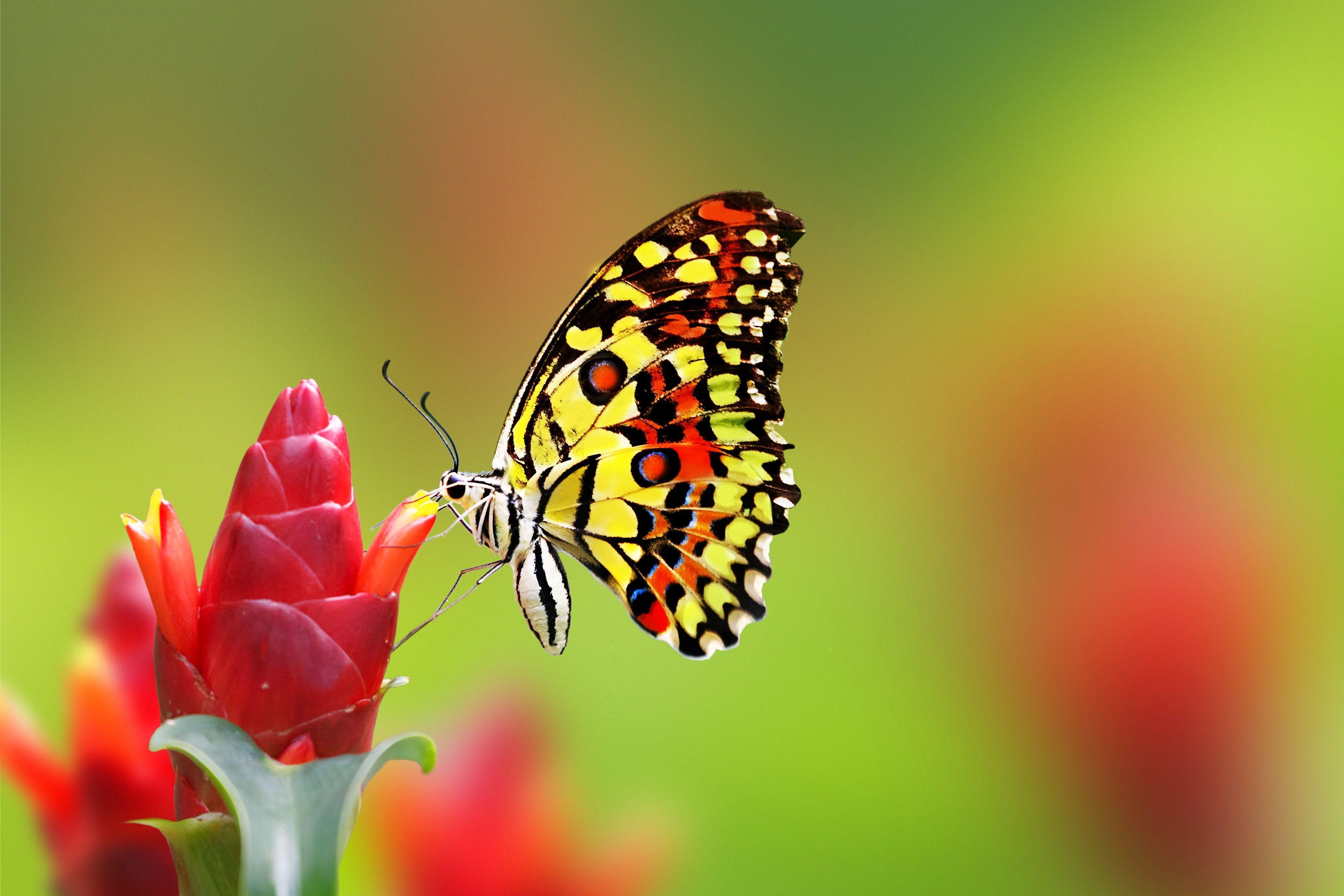 Melihat Kupu Kupu Menghisap Madu Bunga