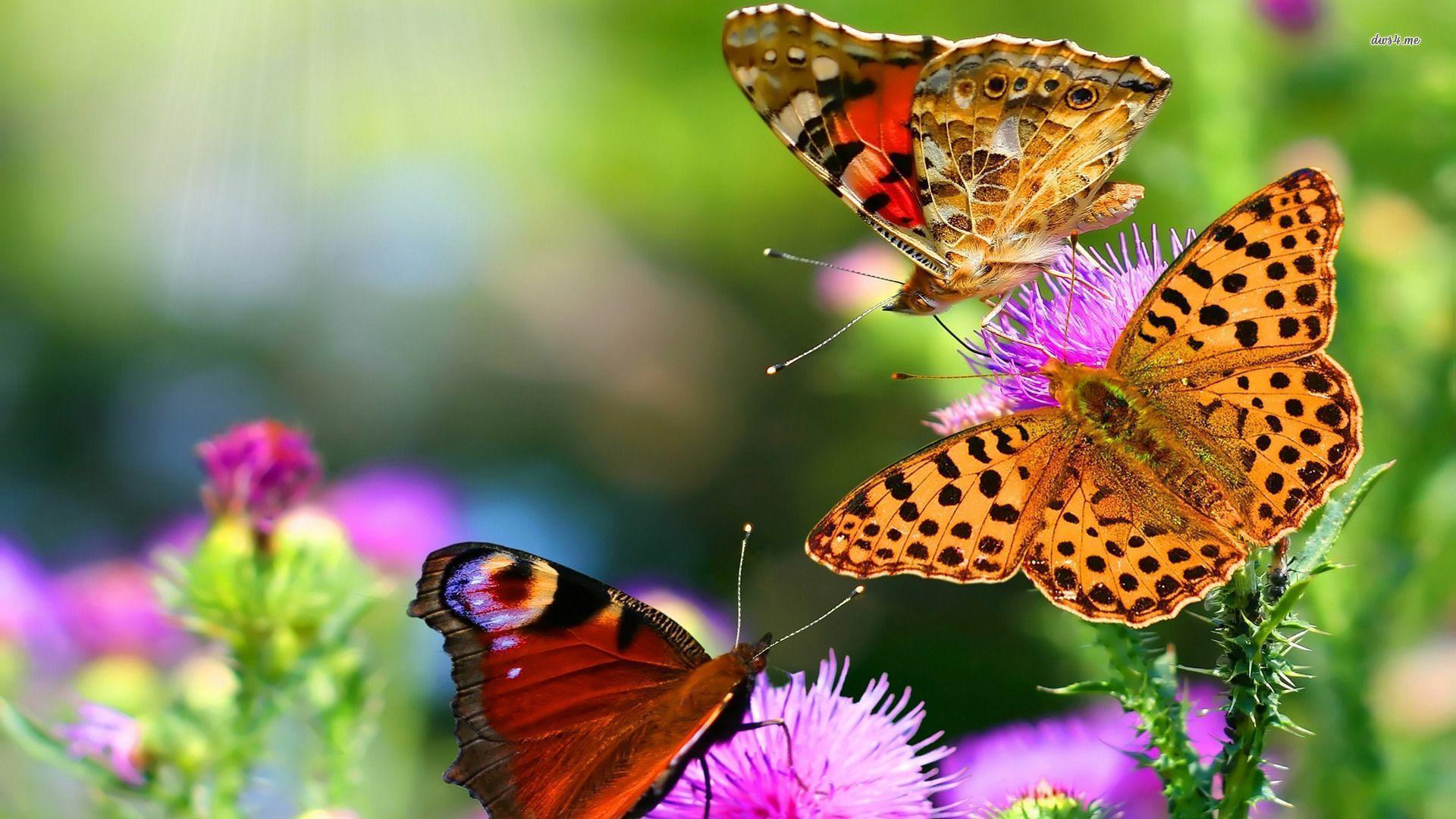 Butterfly Wallpaper Hd on WallpaperGet.com