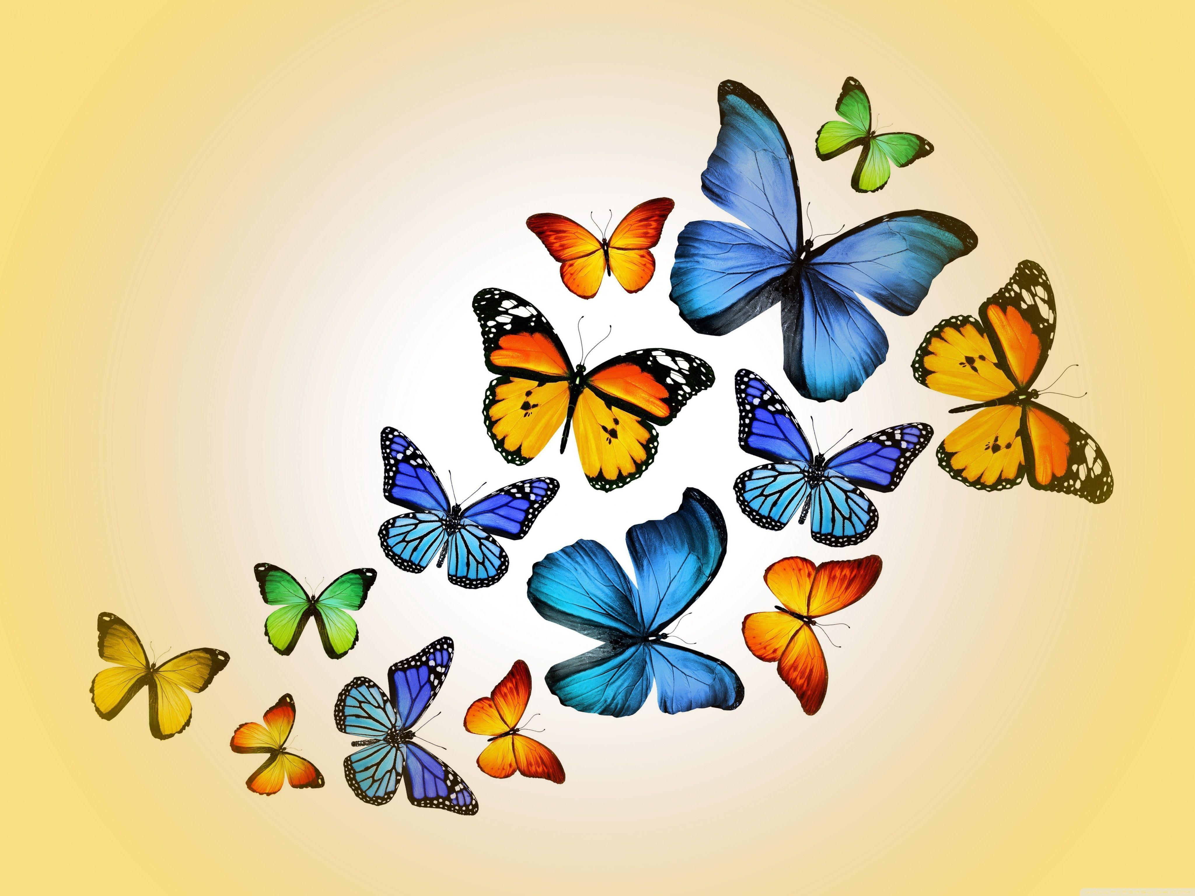 Butterflies HD desktop wallpaper : Widescreen : High Definition ...