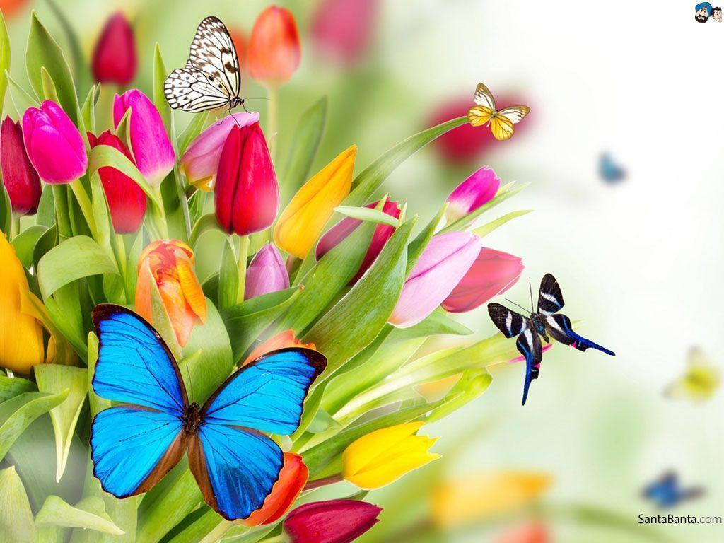 Butterflies Wallpaper - QyGjxZ
