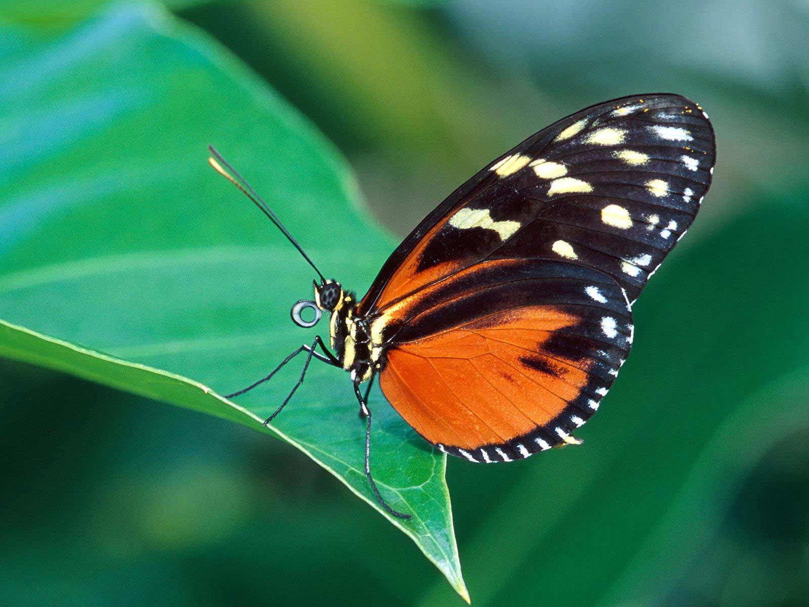Wallpaper Butterflies - WallpaperSafari