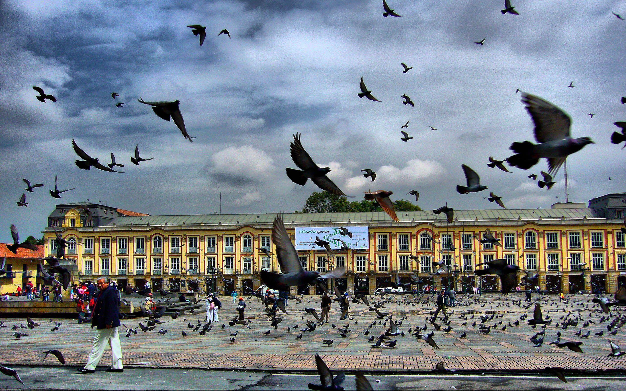 Square Pigeon Bogota Colombia Free Download from zet Wallpaper ...