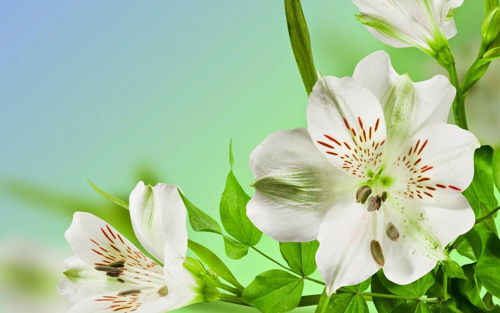Blumen Hintergrundbilder: Blumen Wallpapers