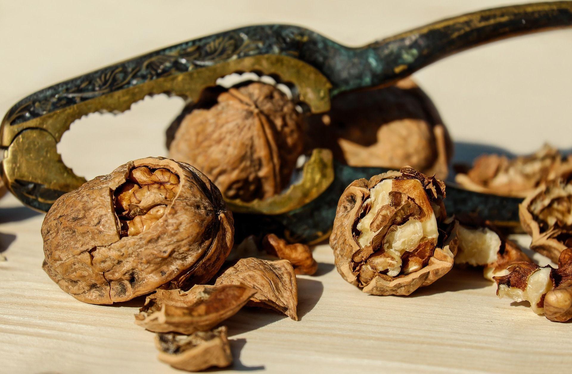 Грецкий орех: лечебные свойства перегородок. Как сделать 86