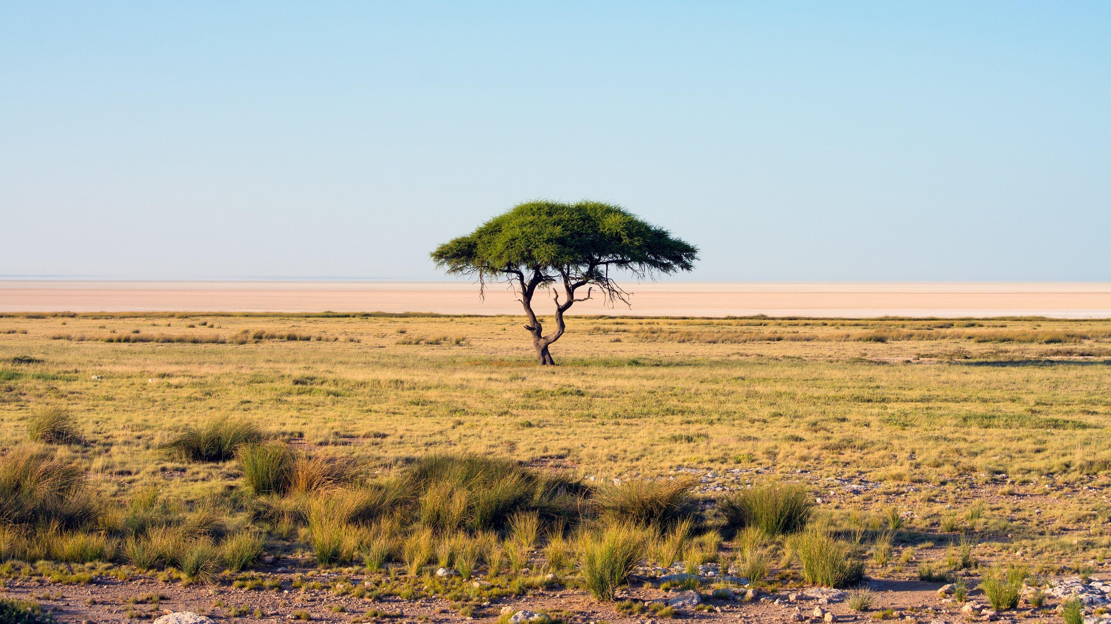 nature, Namibia, Trees, Landscape, Savannah, National park, Africa ...