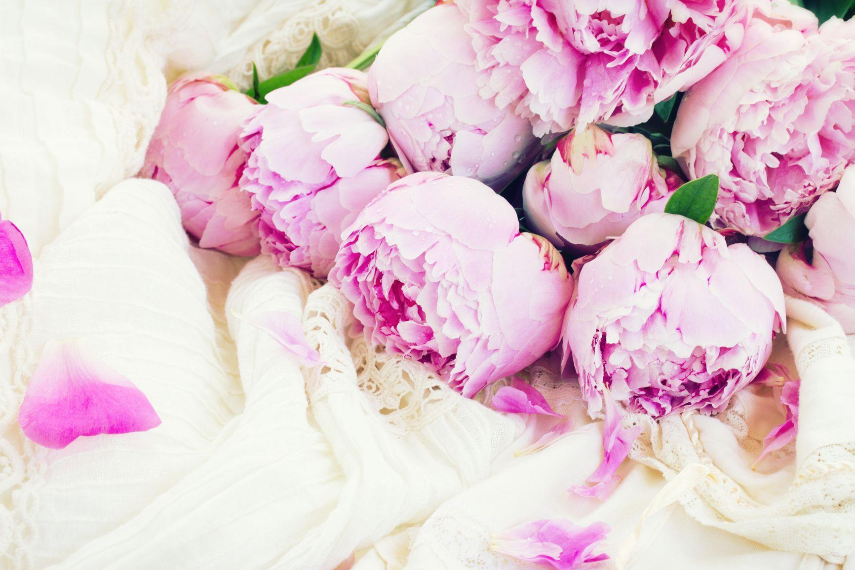 White And Pink Peony Wallpaper
