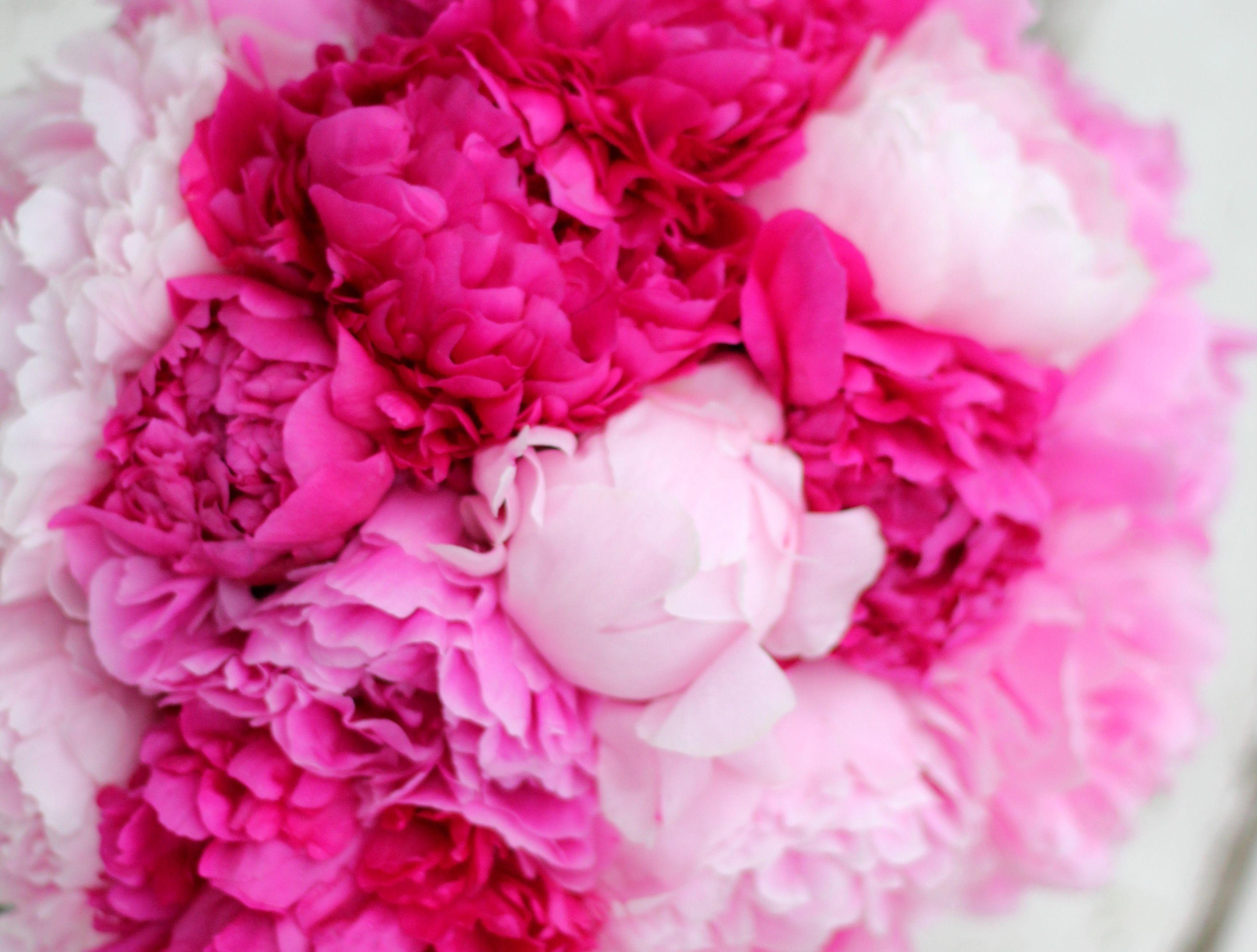 Pink Peony Wallpapers - Wallpaper Cave