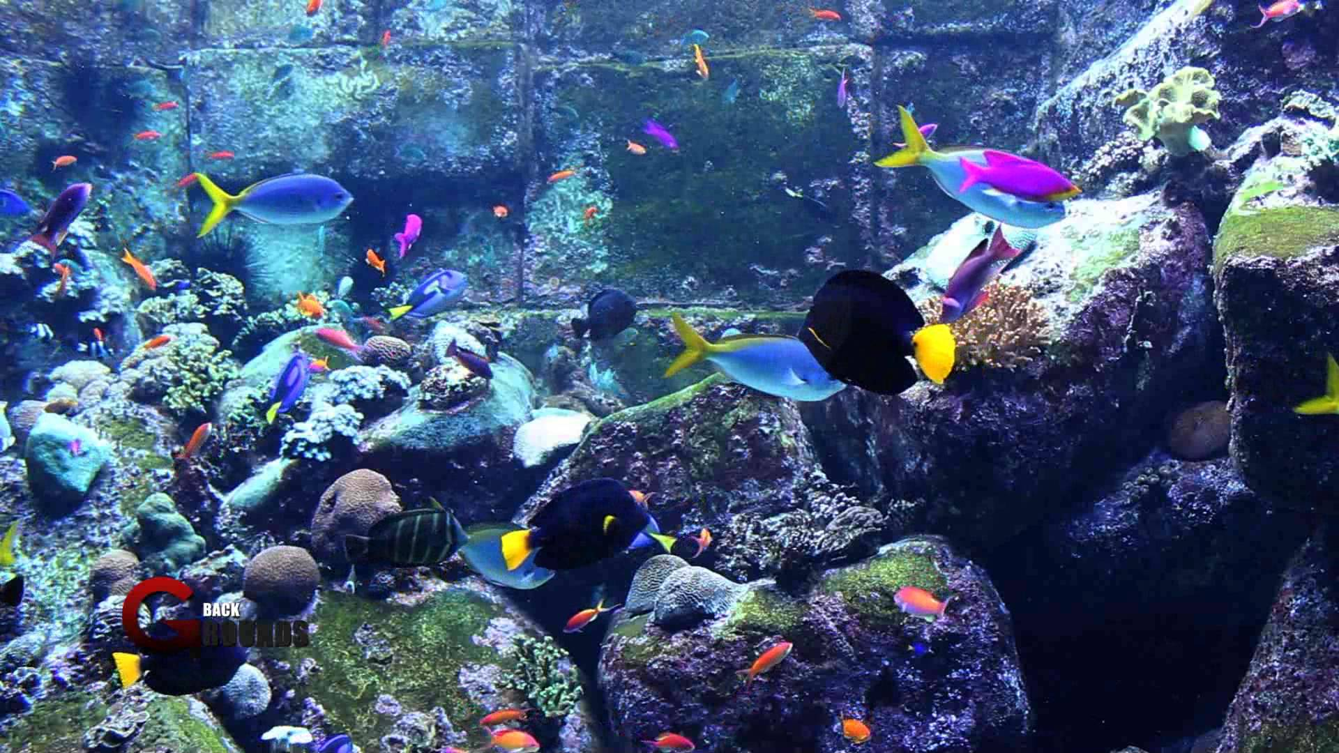 Fish Tank Wallpapers Wallpaper Cave