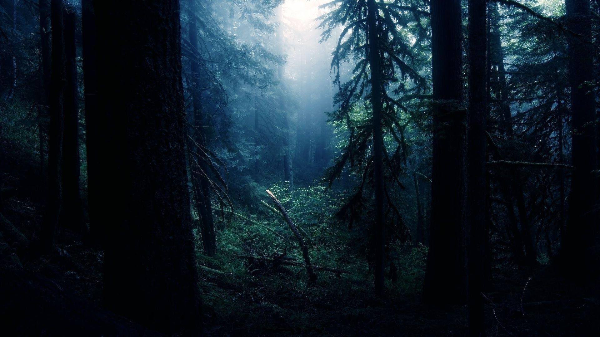 Night Forest Wallpapers Wallpaper Cave