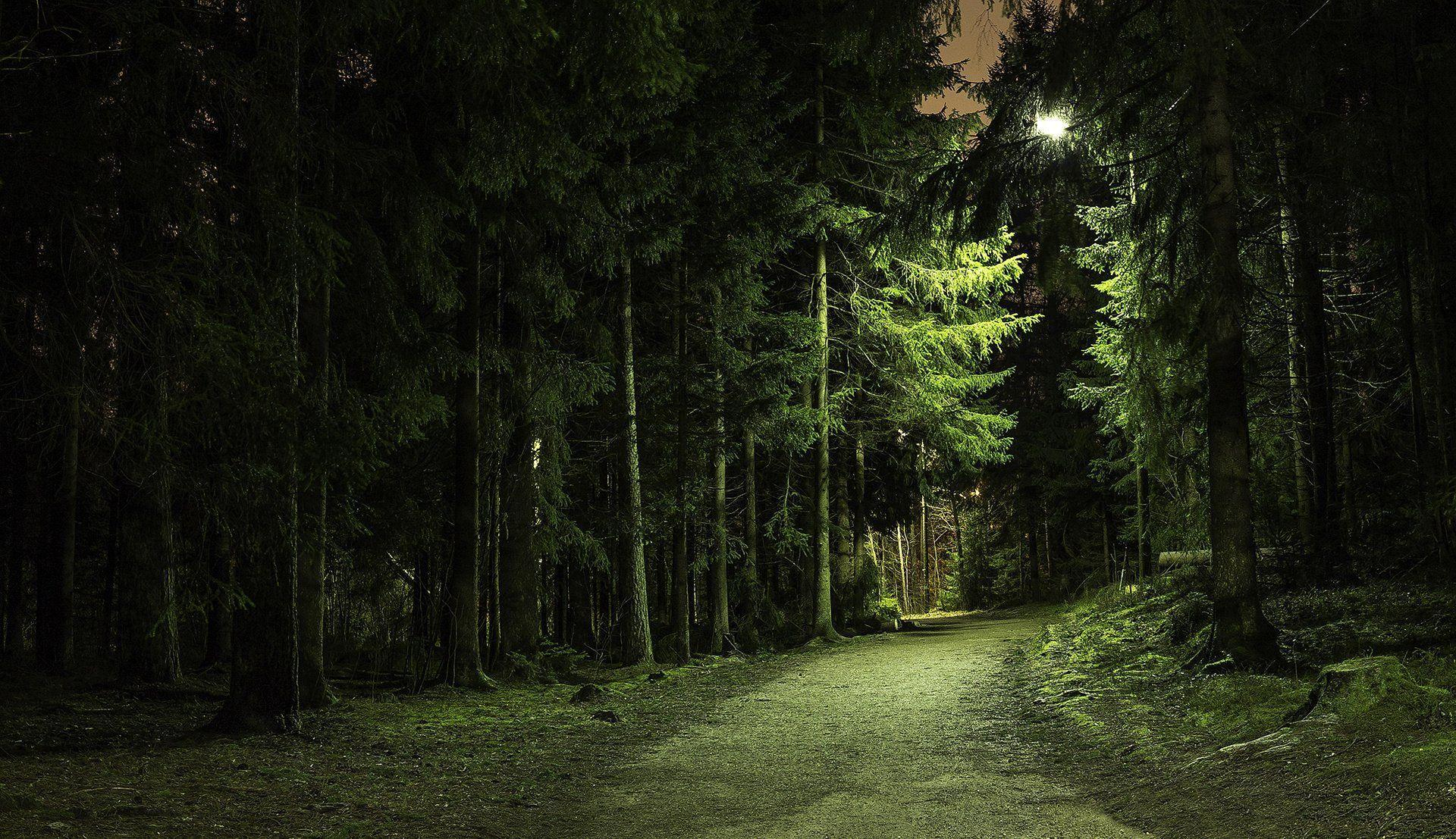 Night Forest Wallpapers - Wallpaper Cave